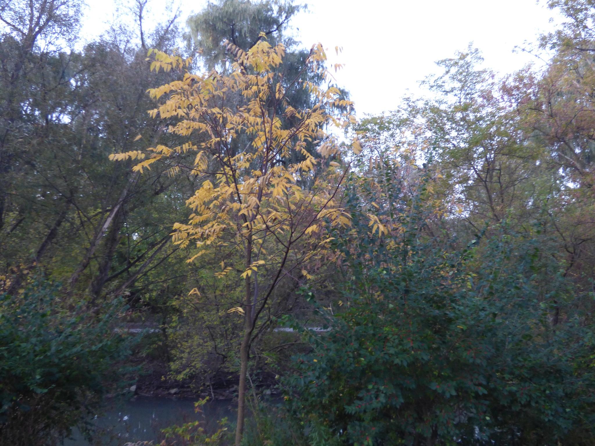 Montebello Park in the fall by RegSoper