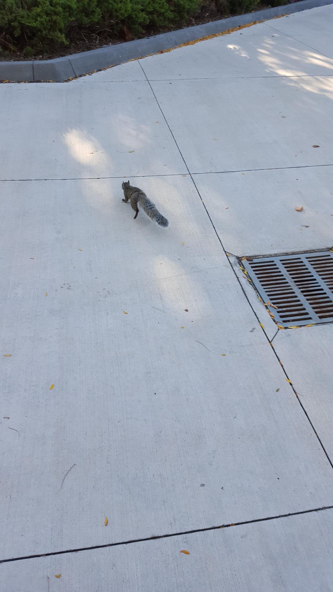 fleeing squirrel by RegSoper