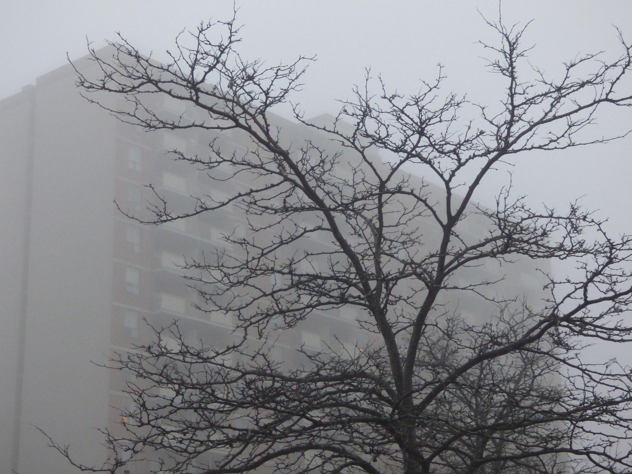 morning mist by RegSoper