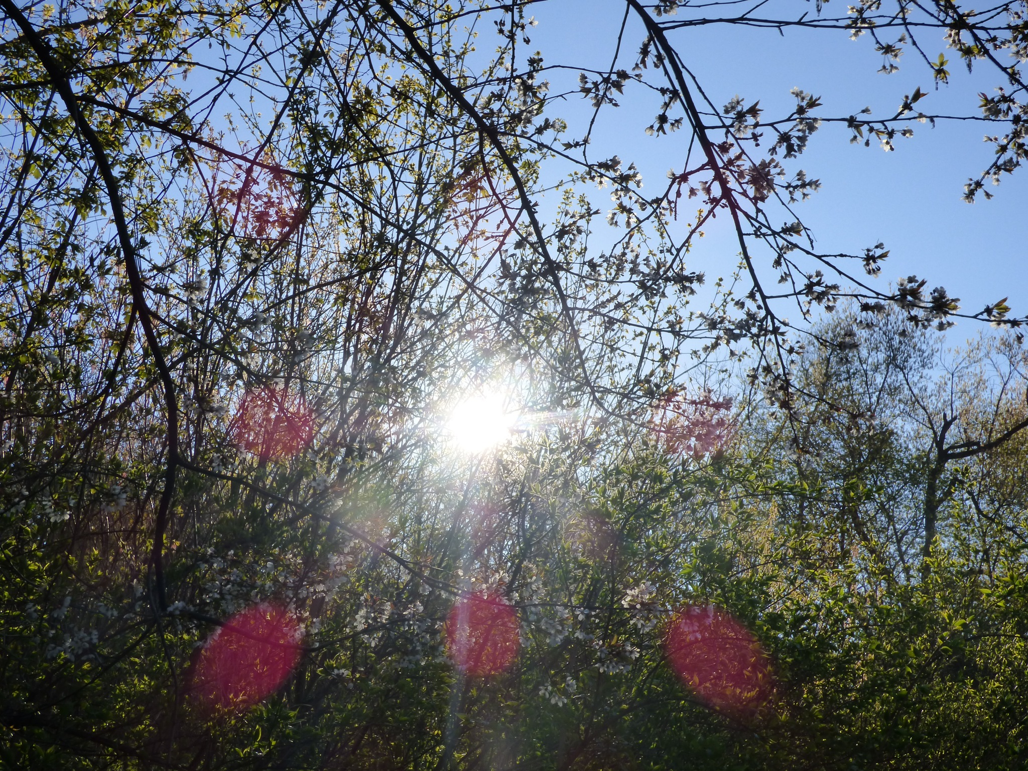 the rising sun by RegSoper