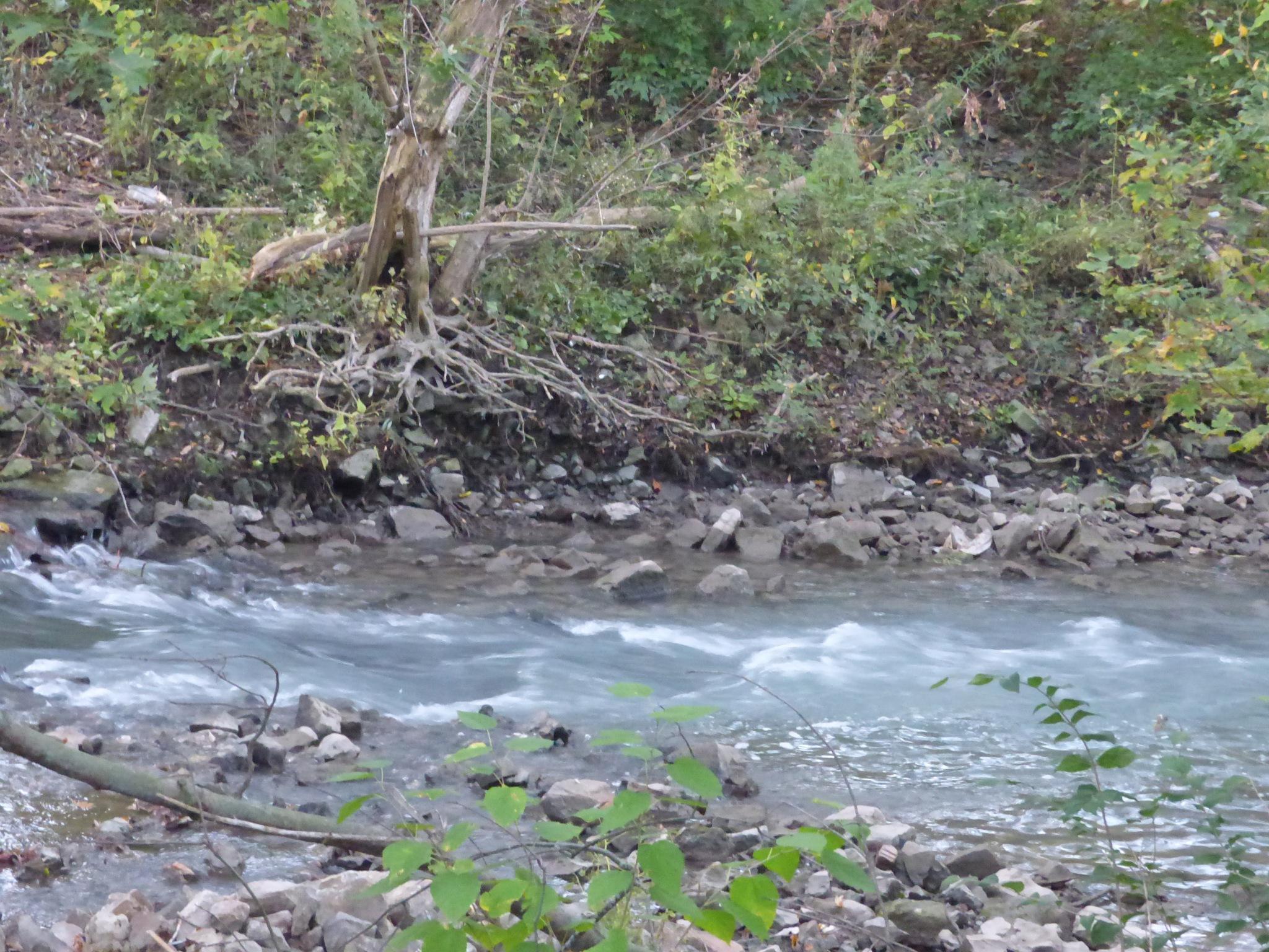 as the creek flows by RegSoper
