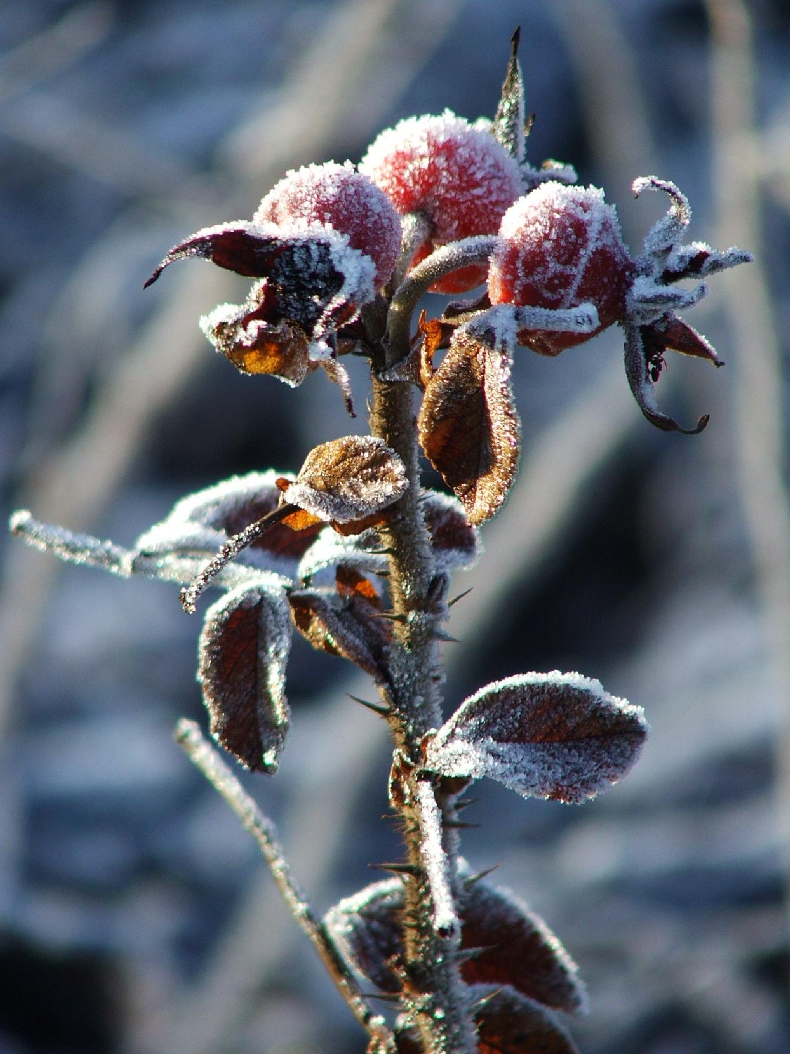 Frozen by MarzannaHartwich