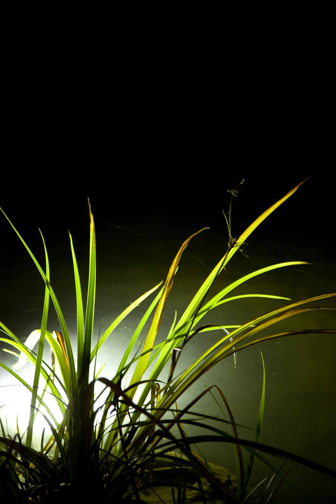 Photo in Nature #grass