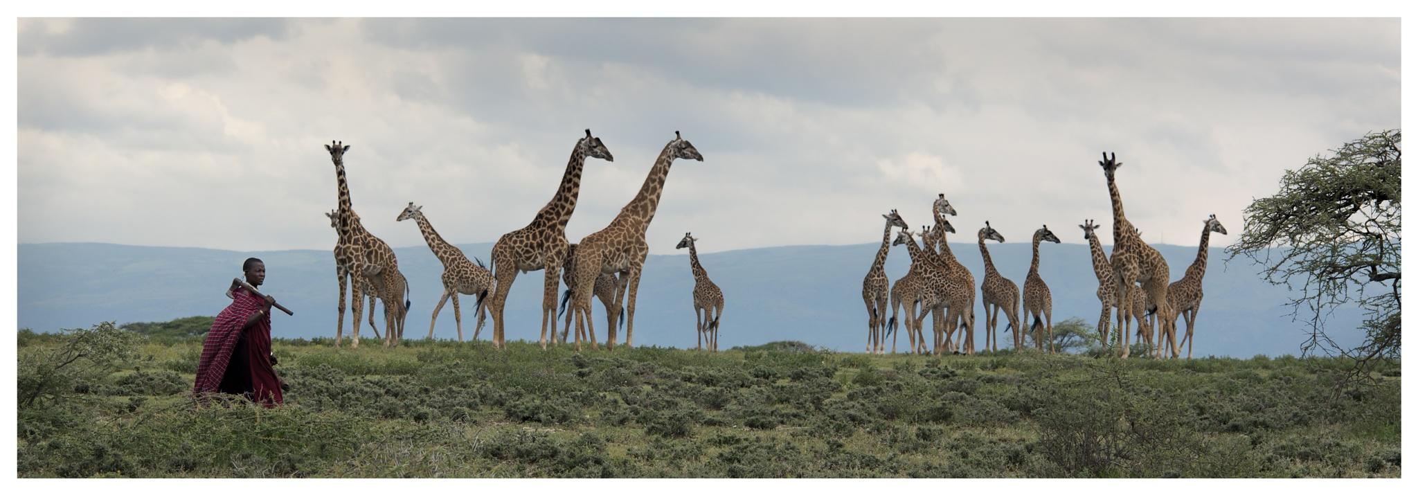 Masai woman and giraffes by Rafal Krzysiak