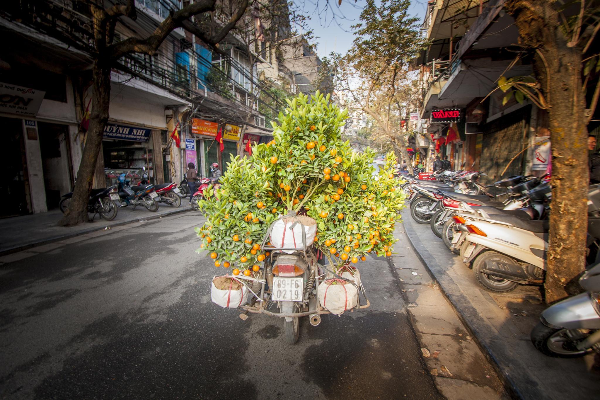Preparation for Tet - Vietnamese new year by Rafal Krzysiak