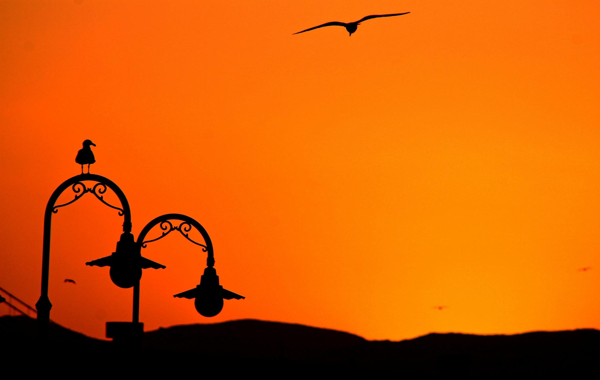 Sunset flight by Tyzin