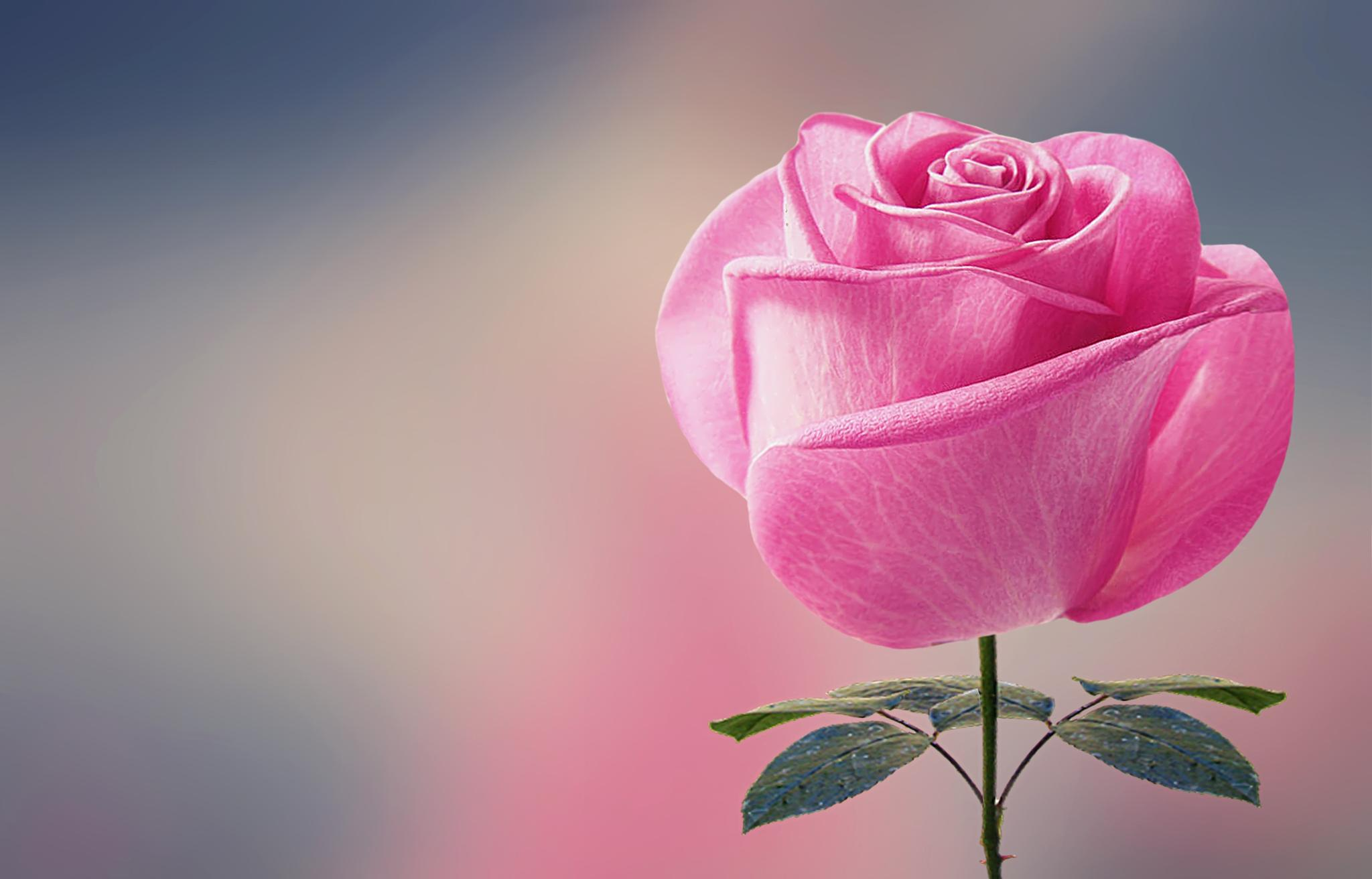 Pink by Bess Hamiti