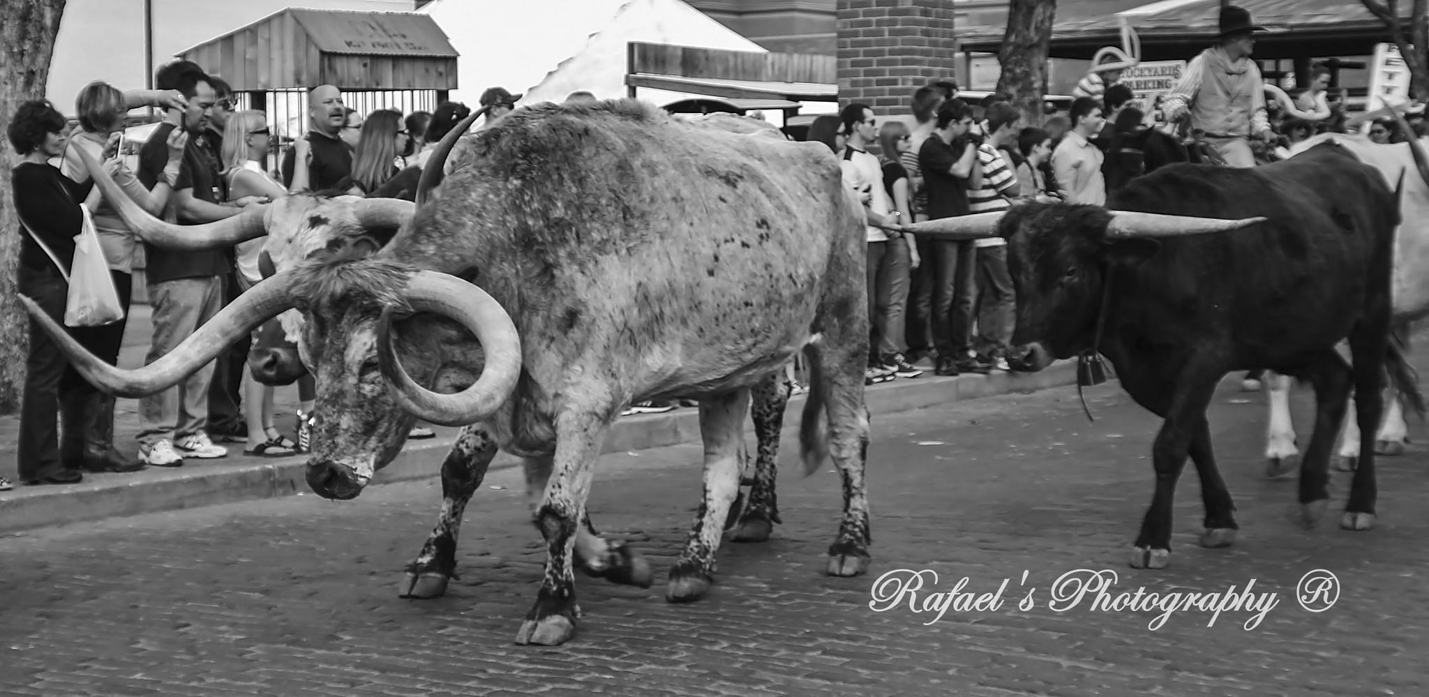 longhorn. by yombino_Image