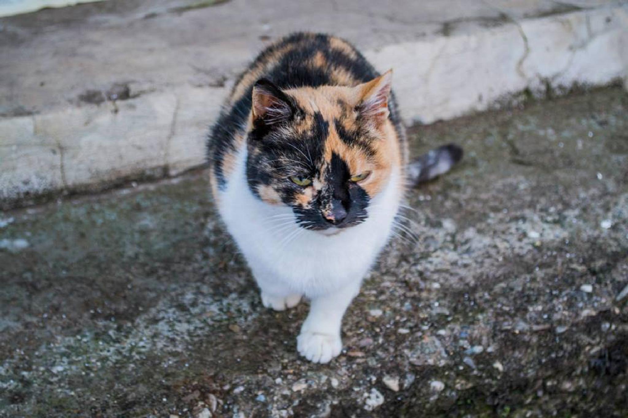 Kitty by Mihai Liviu