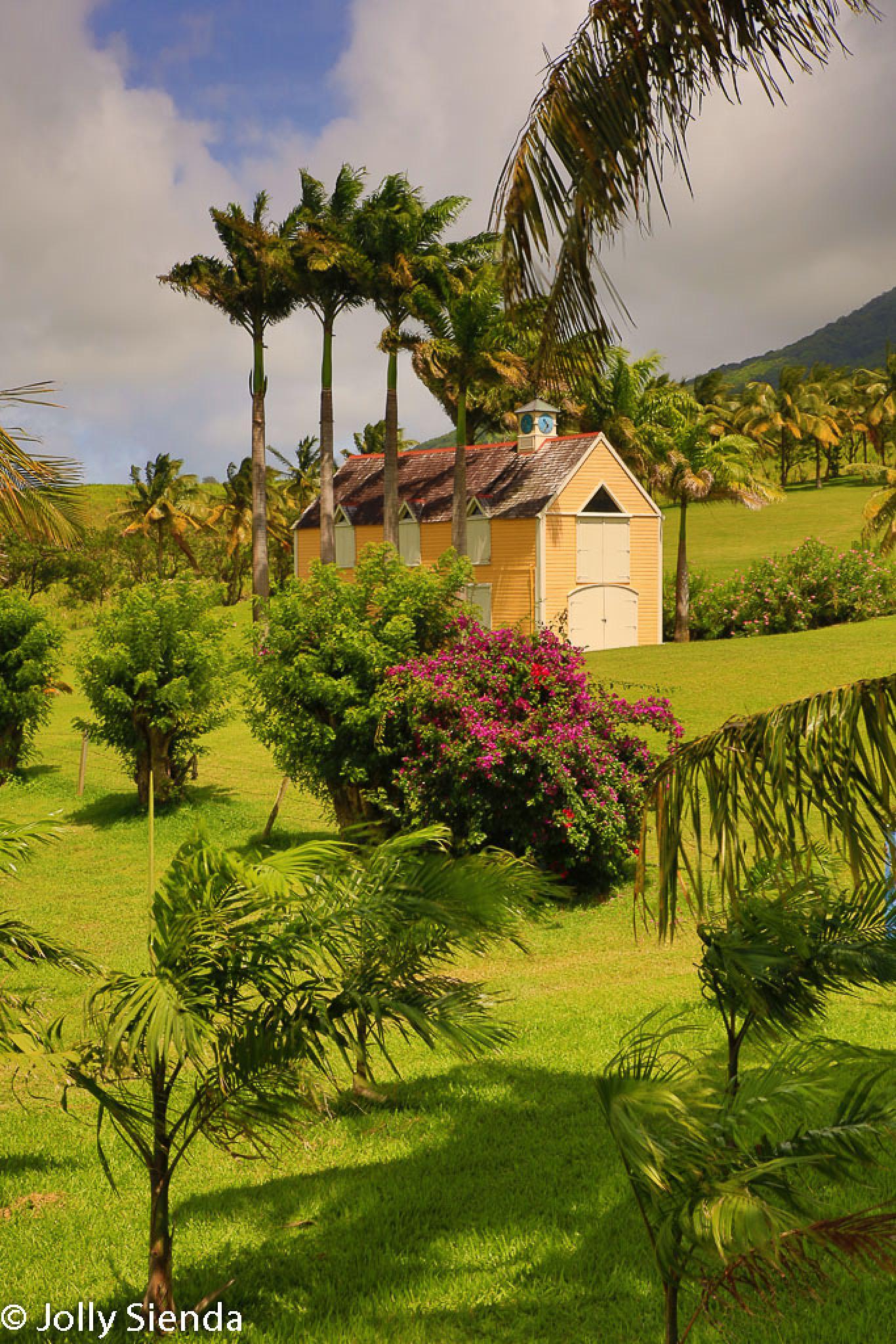 Yellow Barn in a Palm Field by Jolly Sienda