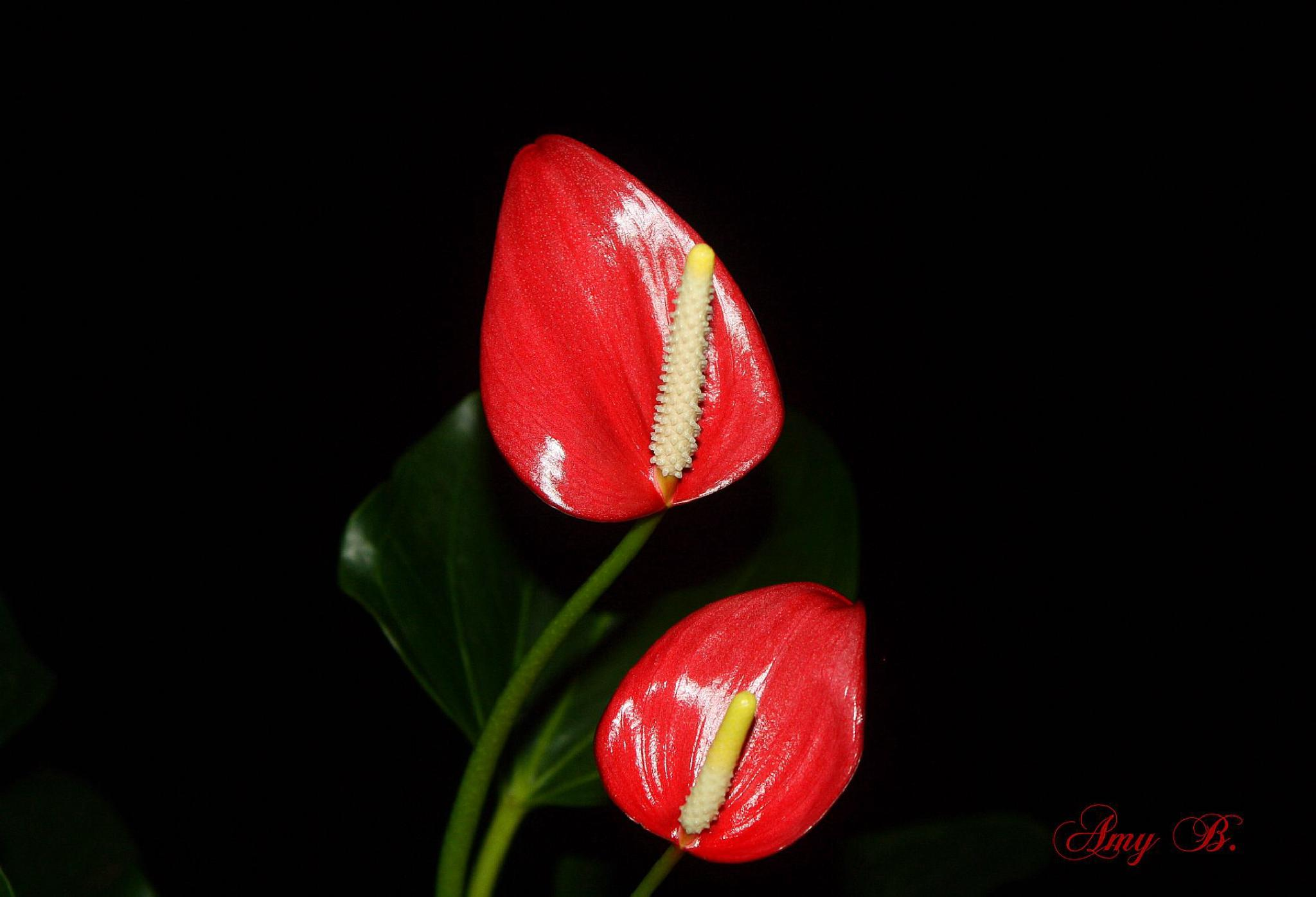 Red and yellow flower at night by amy.conger.9