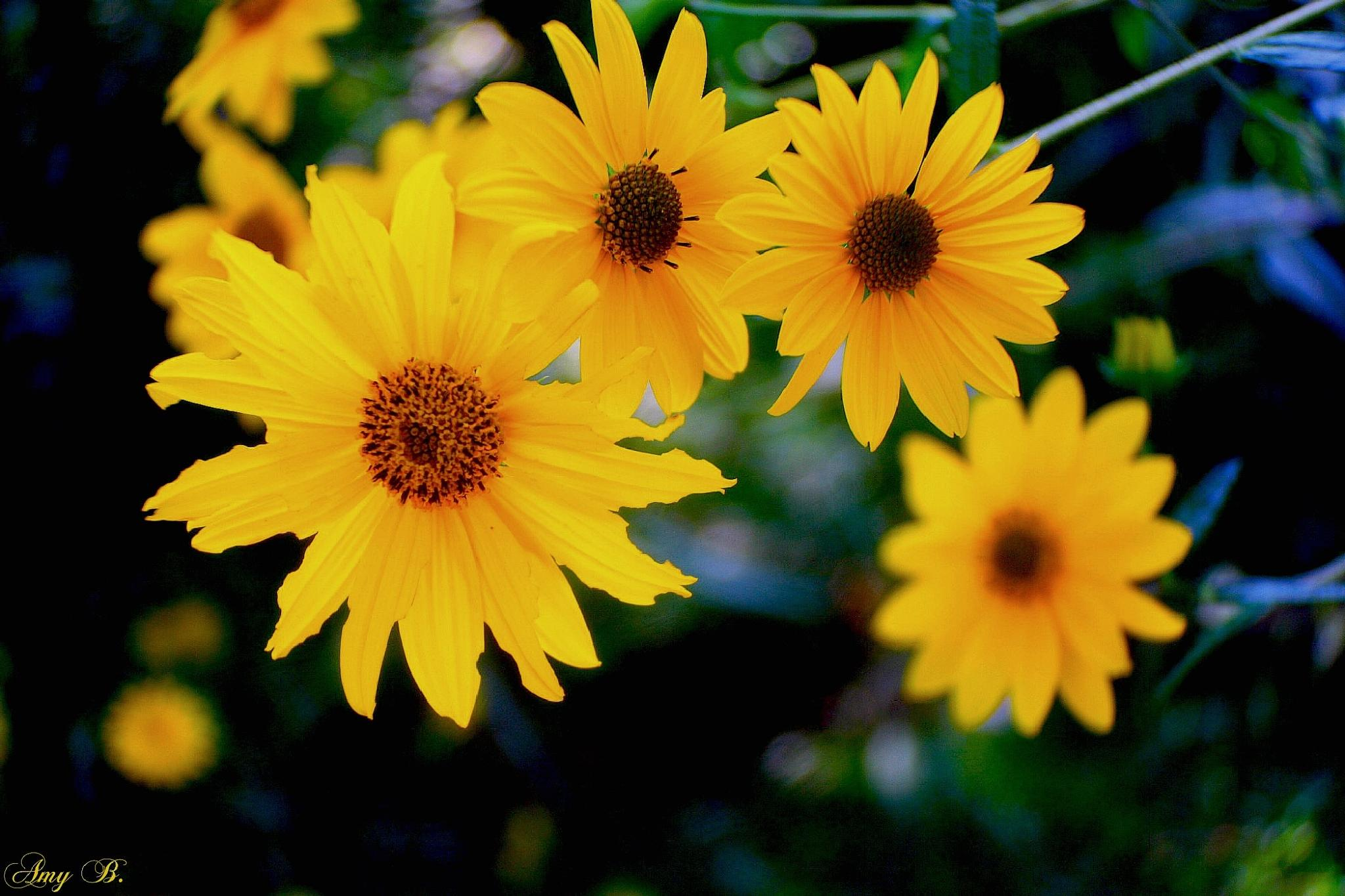 bright yellow flowers by amy.conger.9