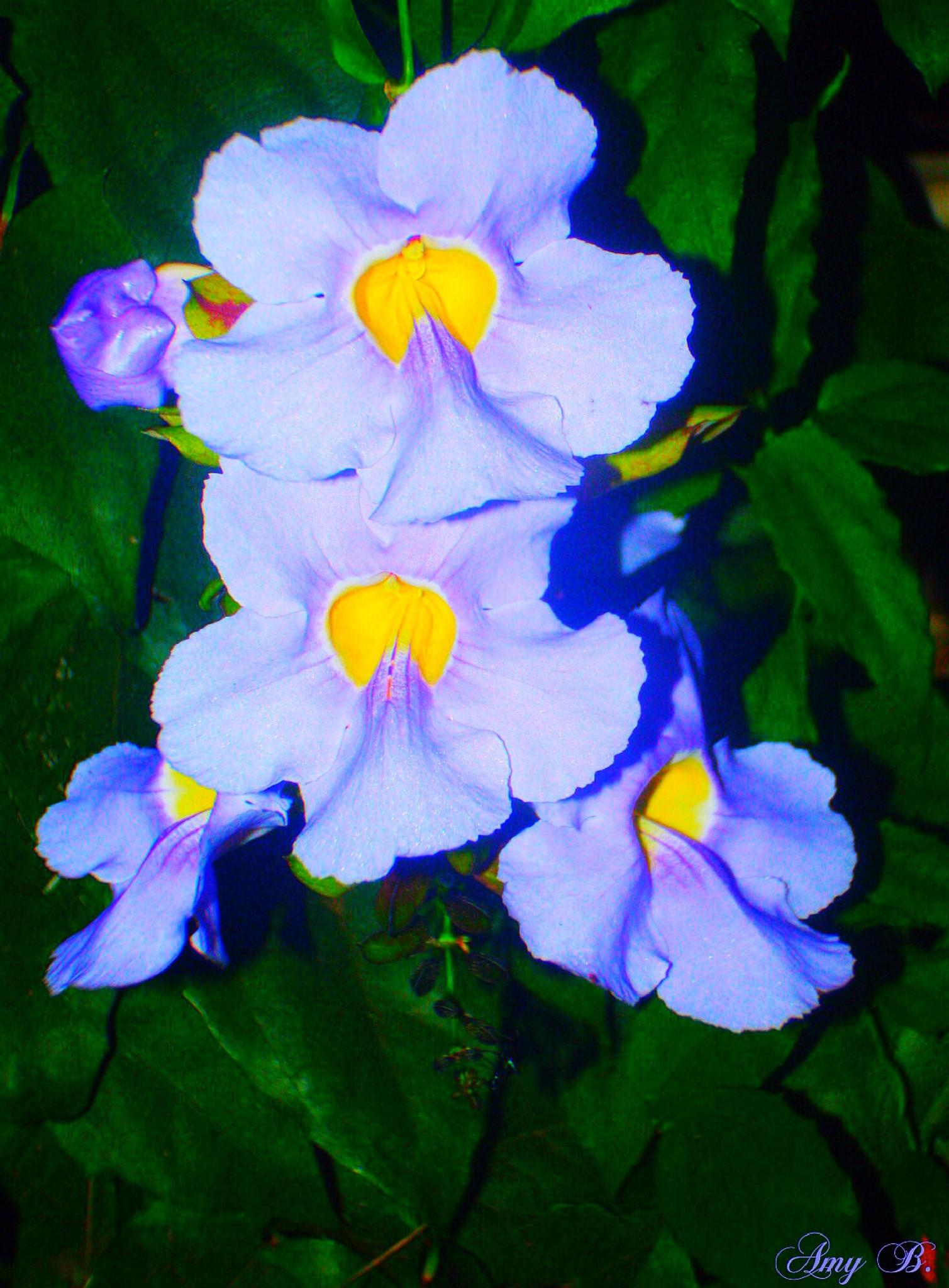 Bright blue flowers by amy.conger.9