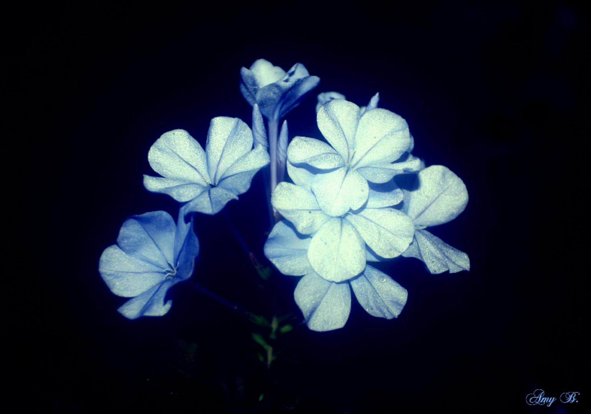 Lots of little blue flowers at night by amy.conger.9