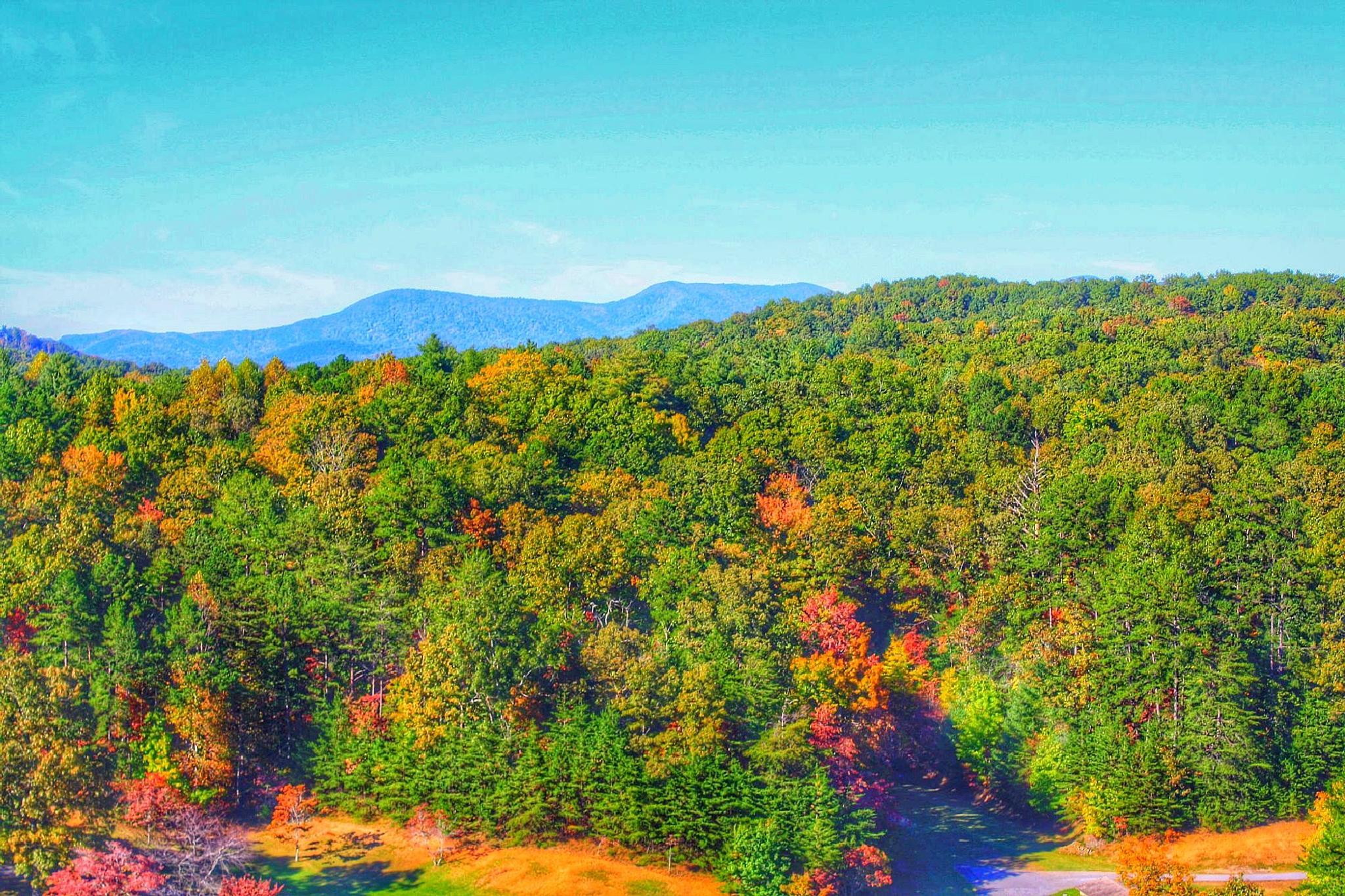 Fall leaves in the Blue ridge mountains by amy.conger.9