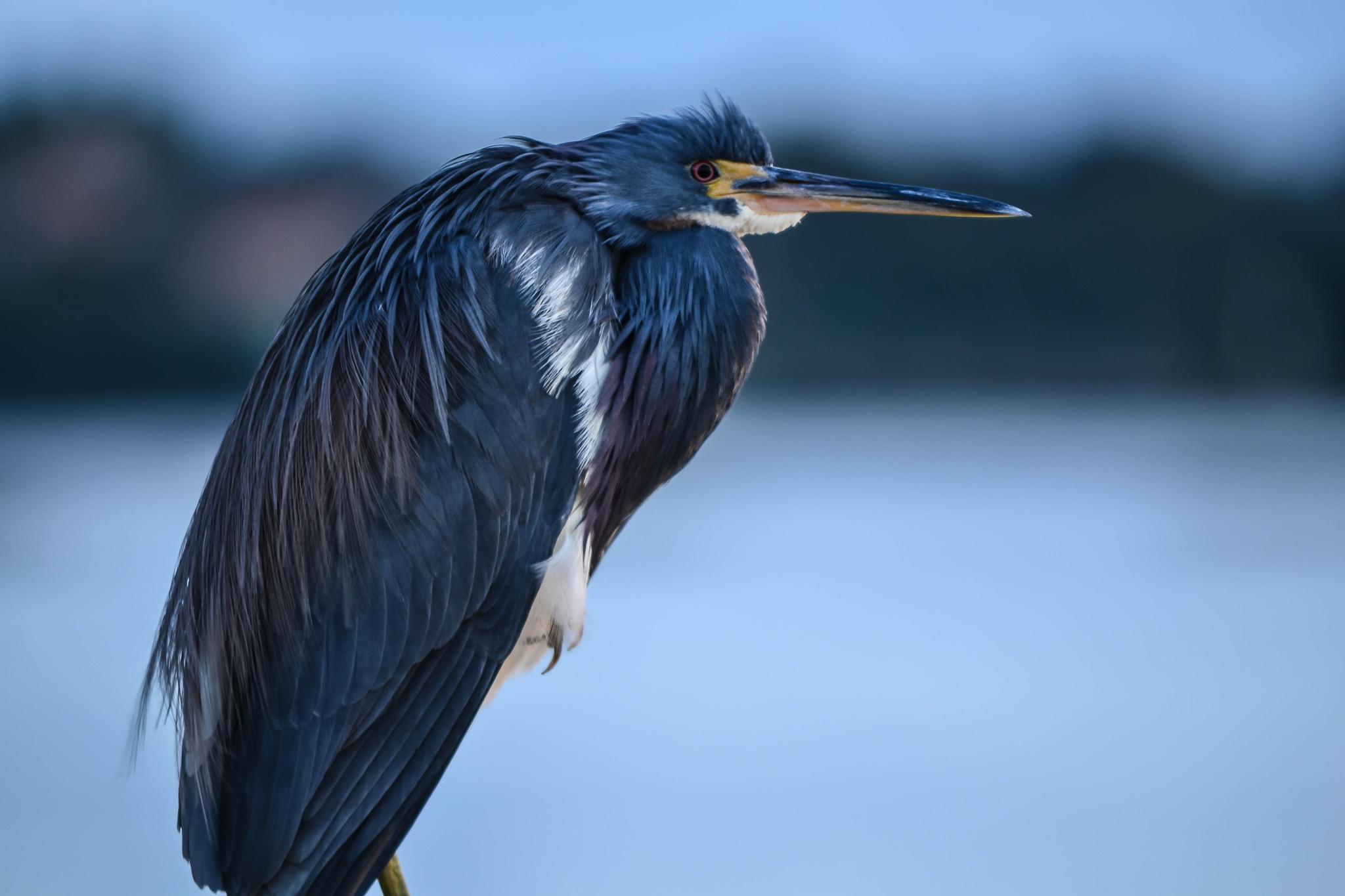 Bird by Jan Herren