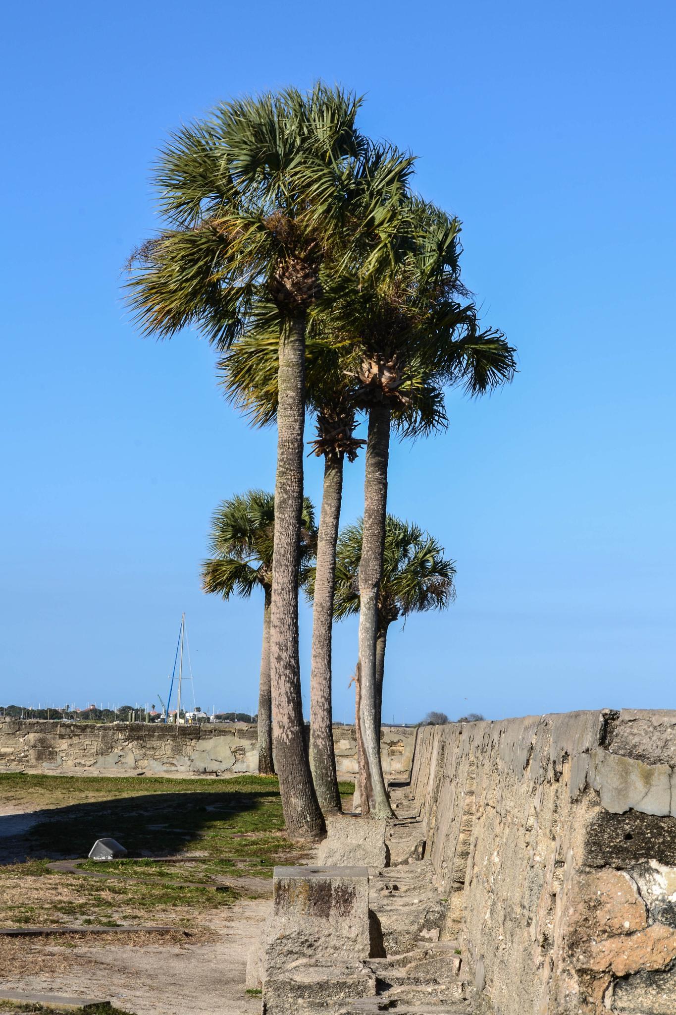 Fort Castillo de San Marcos II by Jan Herren