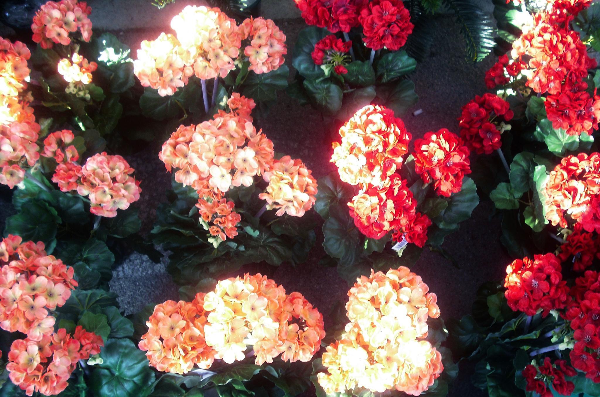 Flowers by Massimo Onetti Muda