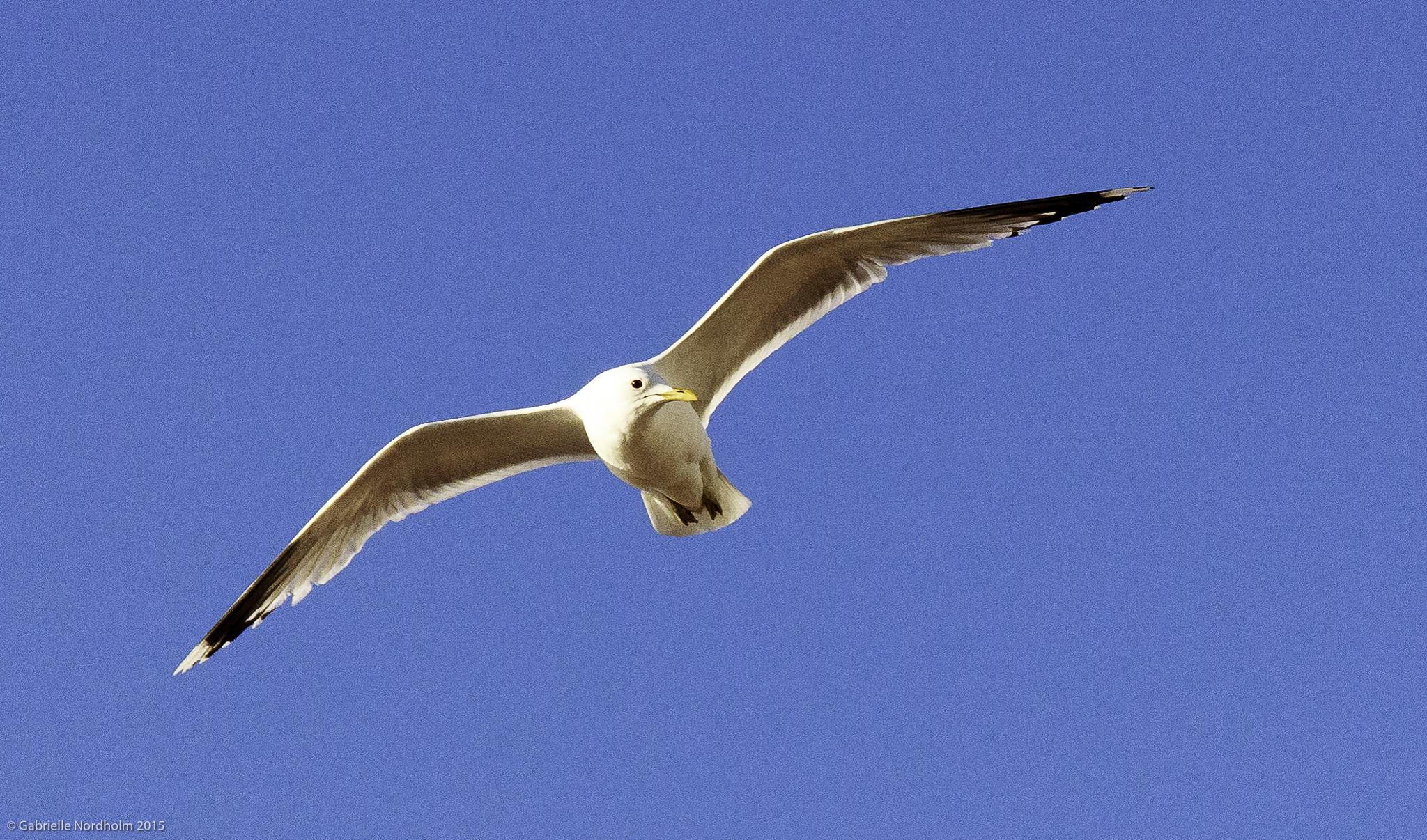 Free like a bird by Gabino