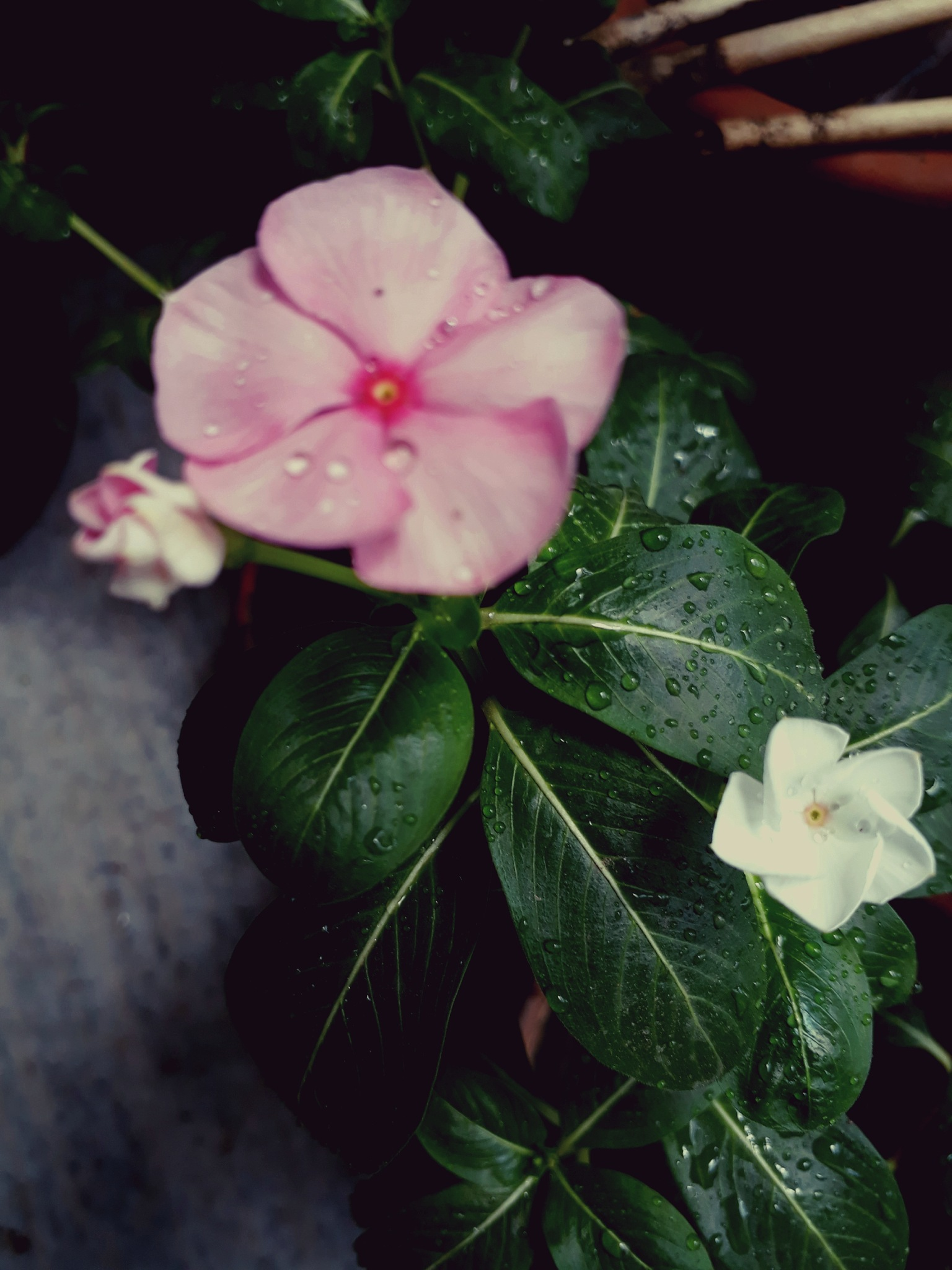 Bloom by Joydeep Pal