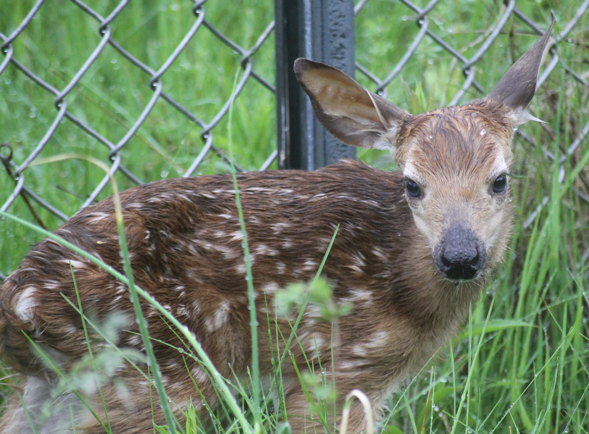 a little more soggy bambi by cboehlkejr