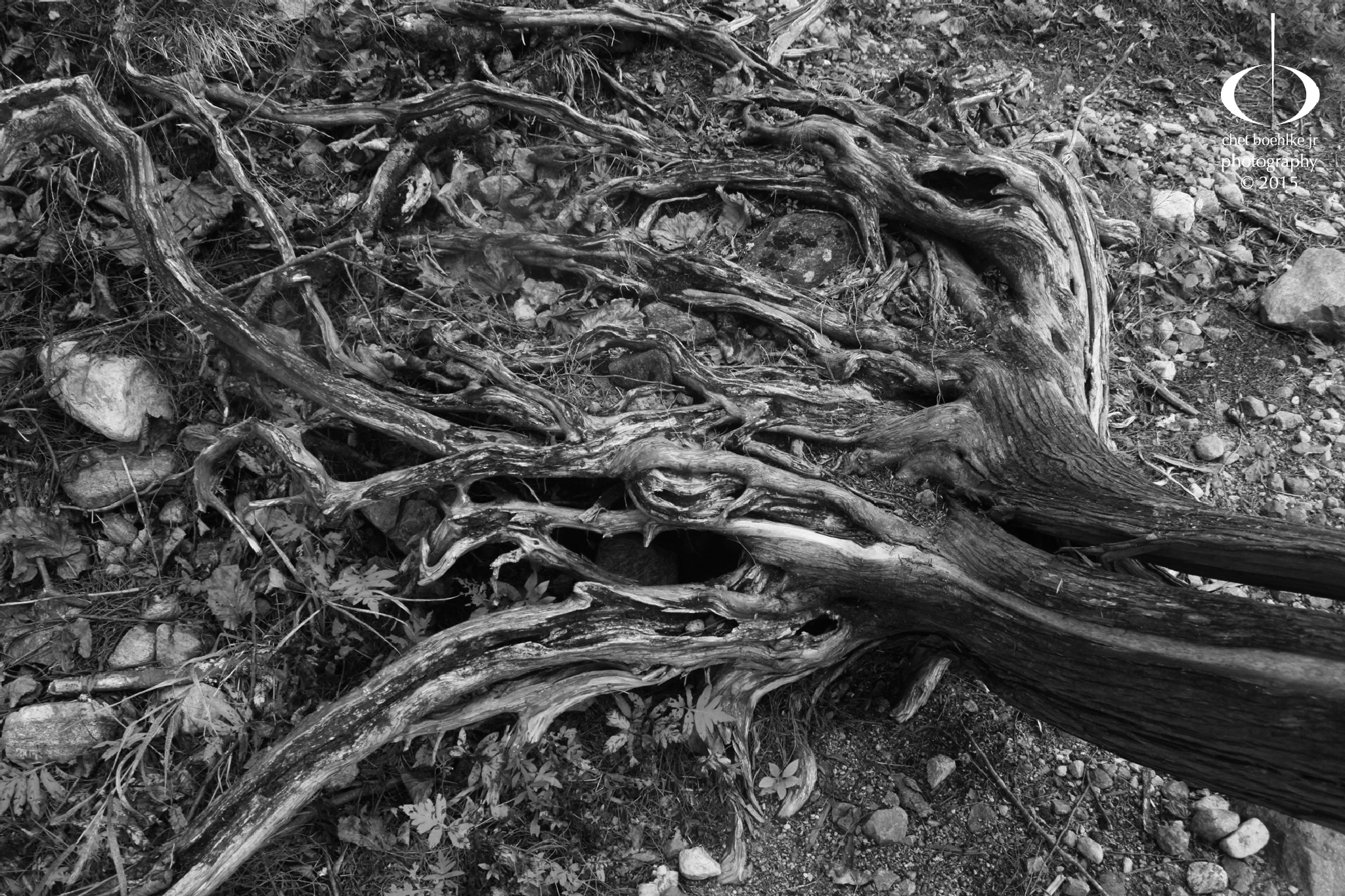 the root cause by cboehlkejr