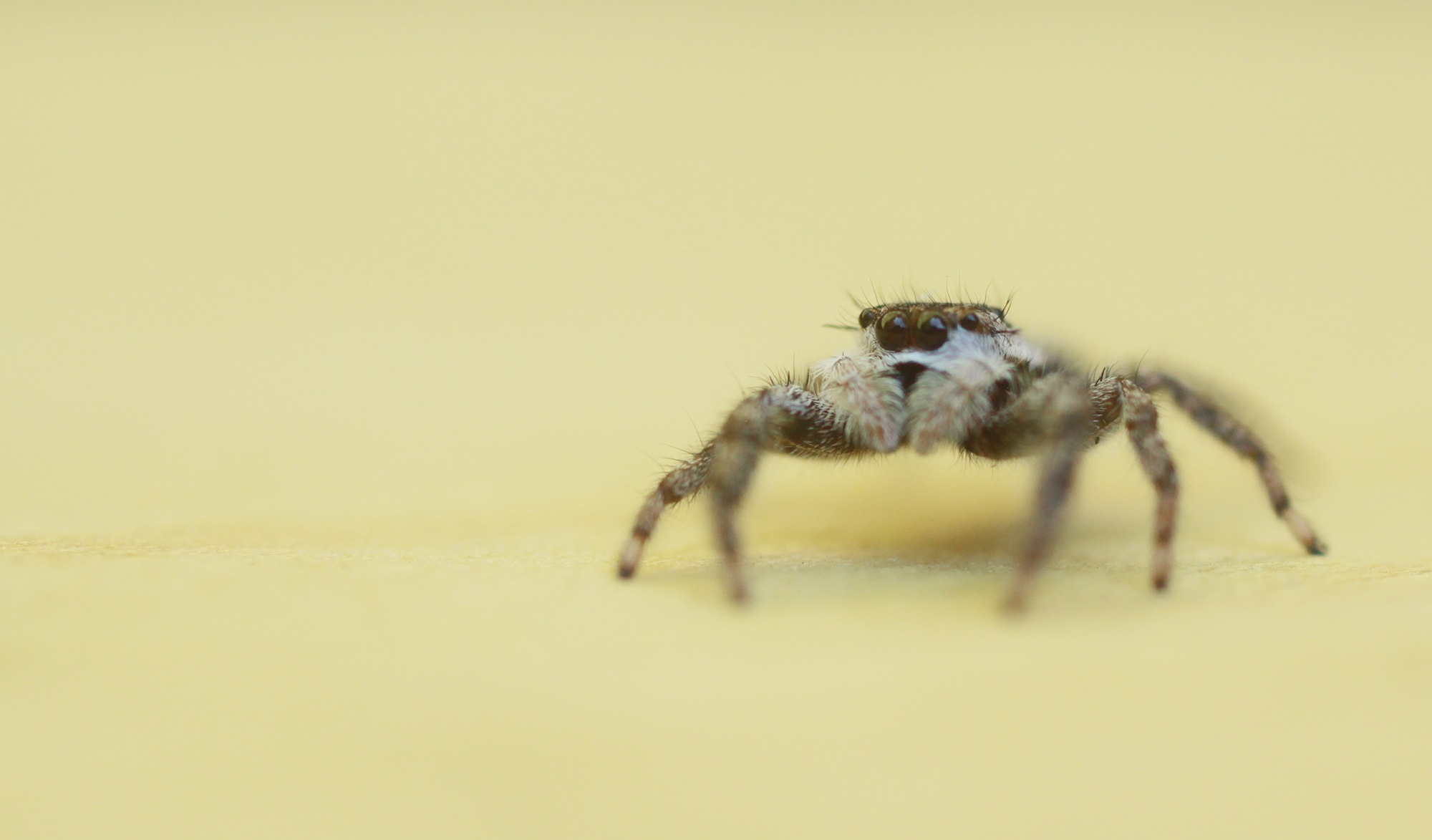 jumper on the prowl by cboehlkejr