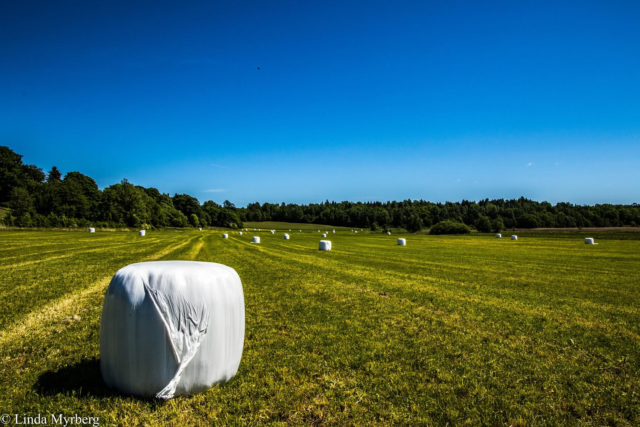 Hay bales on field by Linda Myrberg