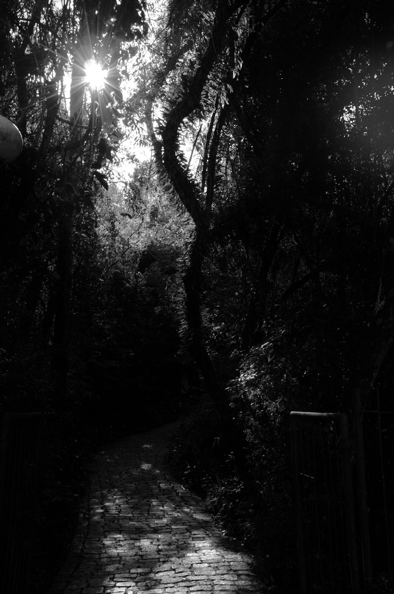 path II by Thiago Alessandre