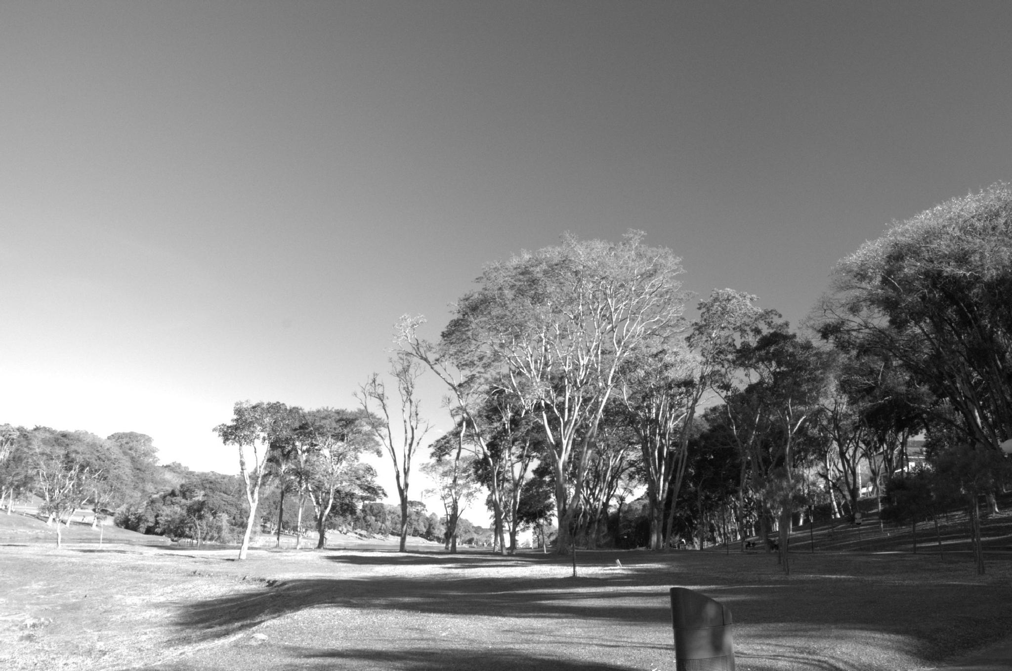 Sao Lourenco park by Thiago Alessandre