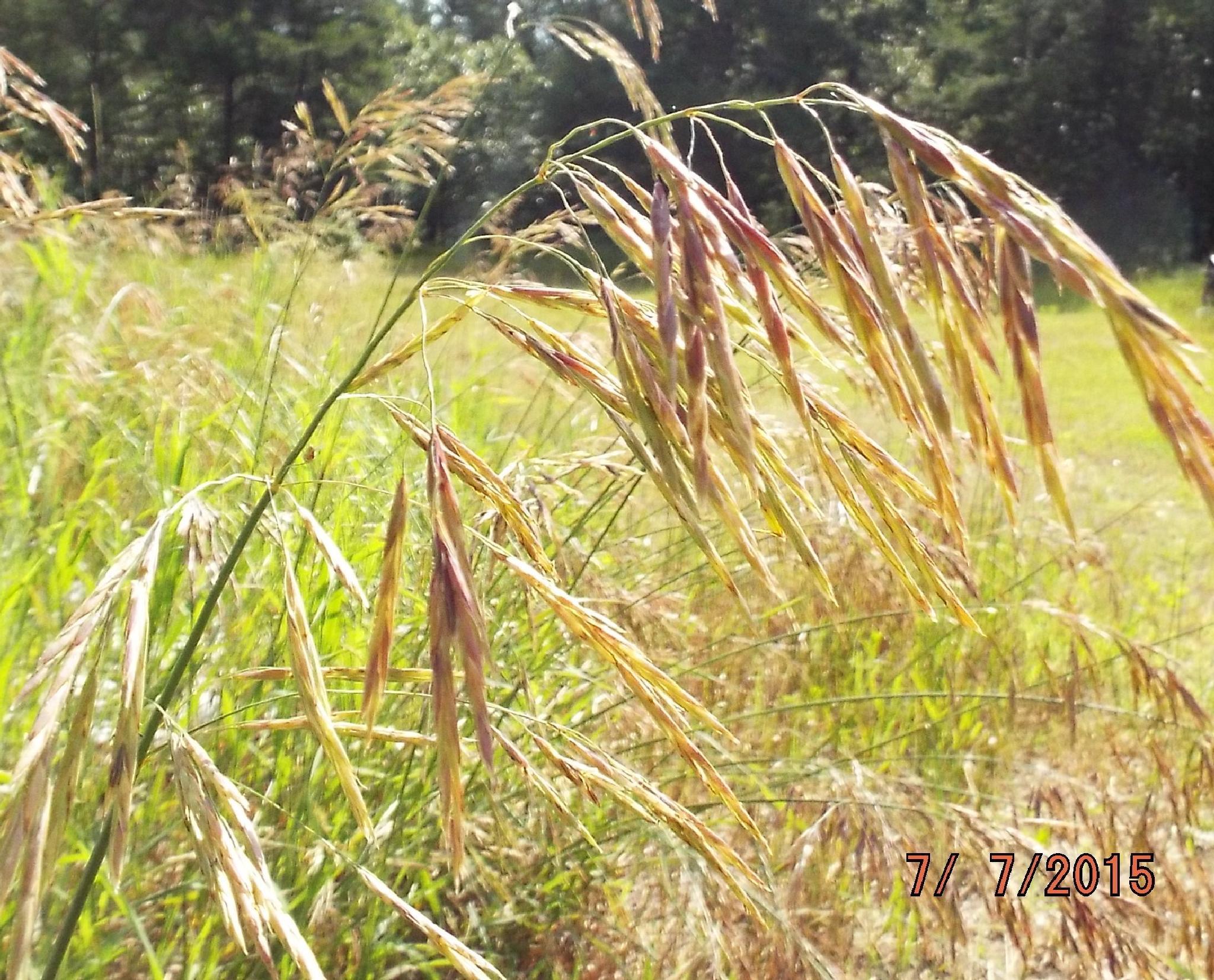 Photo in Rural #weeds #outdoor #wild