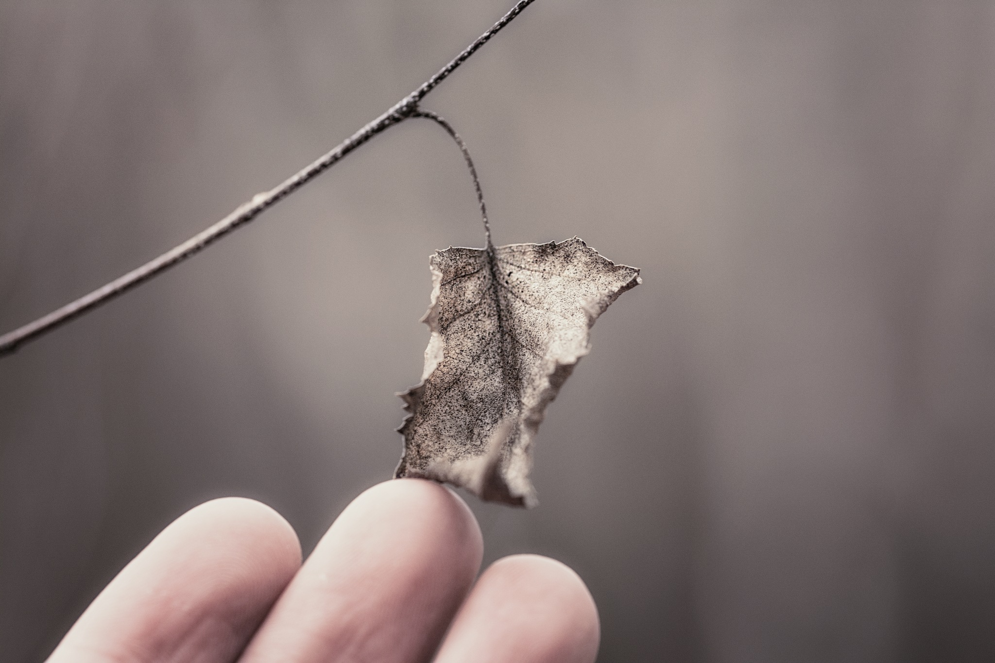 Holding on to What Remains by Jesse Kalberlah
