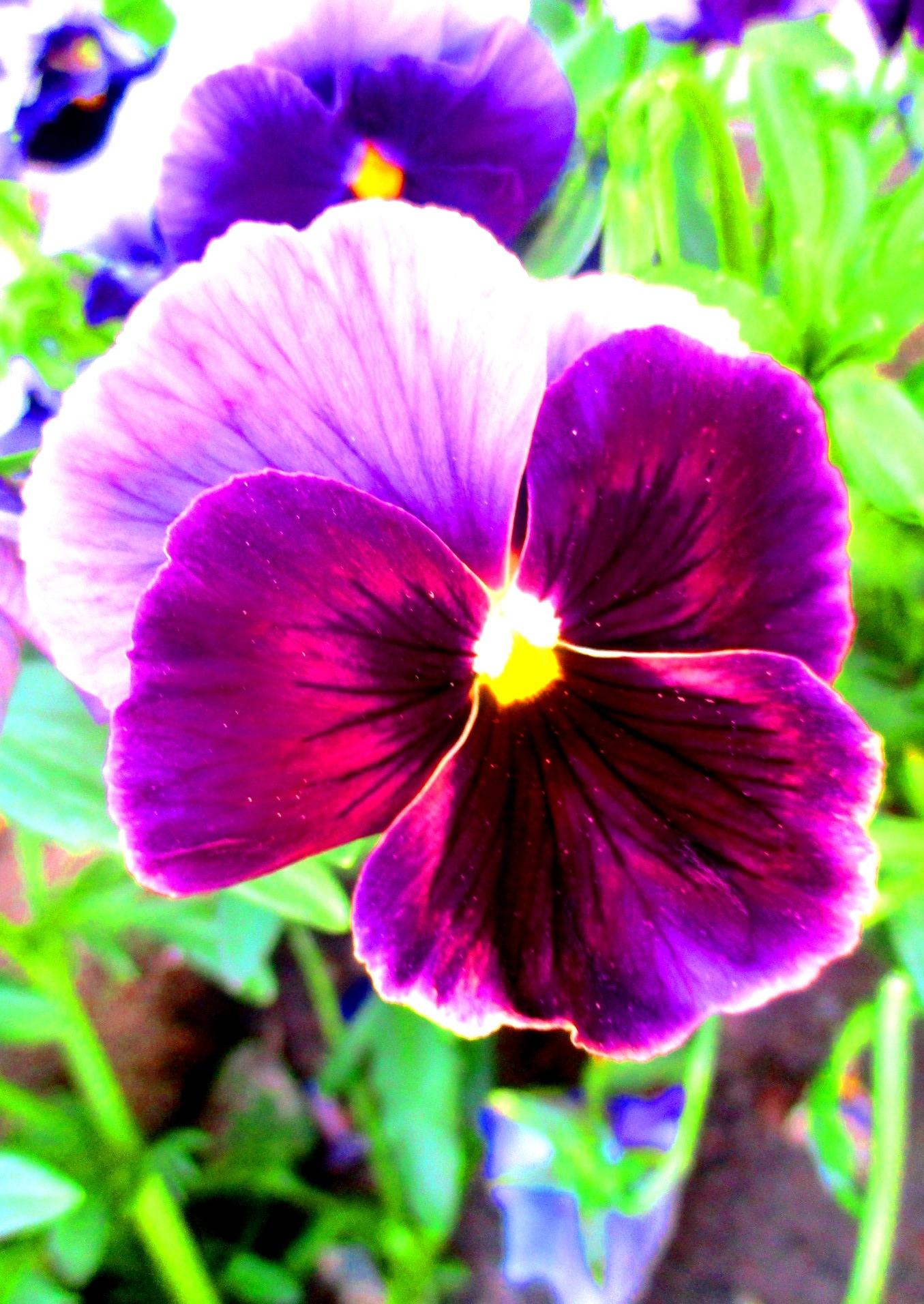 Purple Flower ☺ by Simona Bakševičiūtė