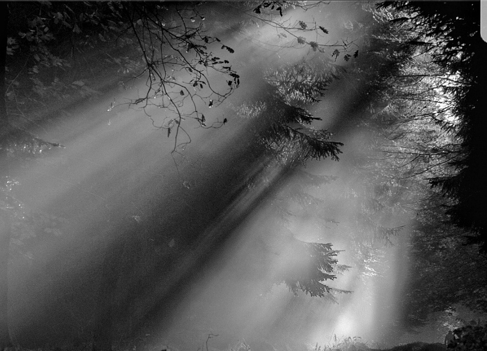 Light  by tjsandofoto