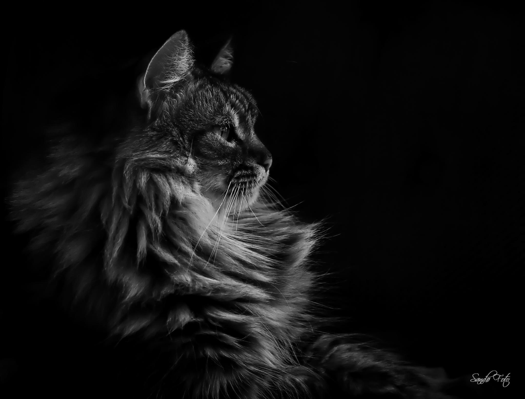 Majestic Cat by tjsandofoto