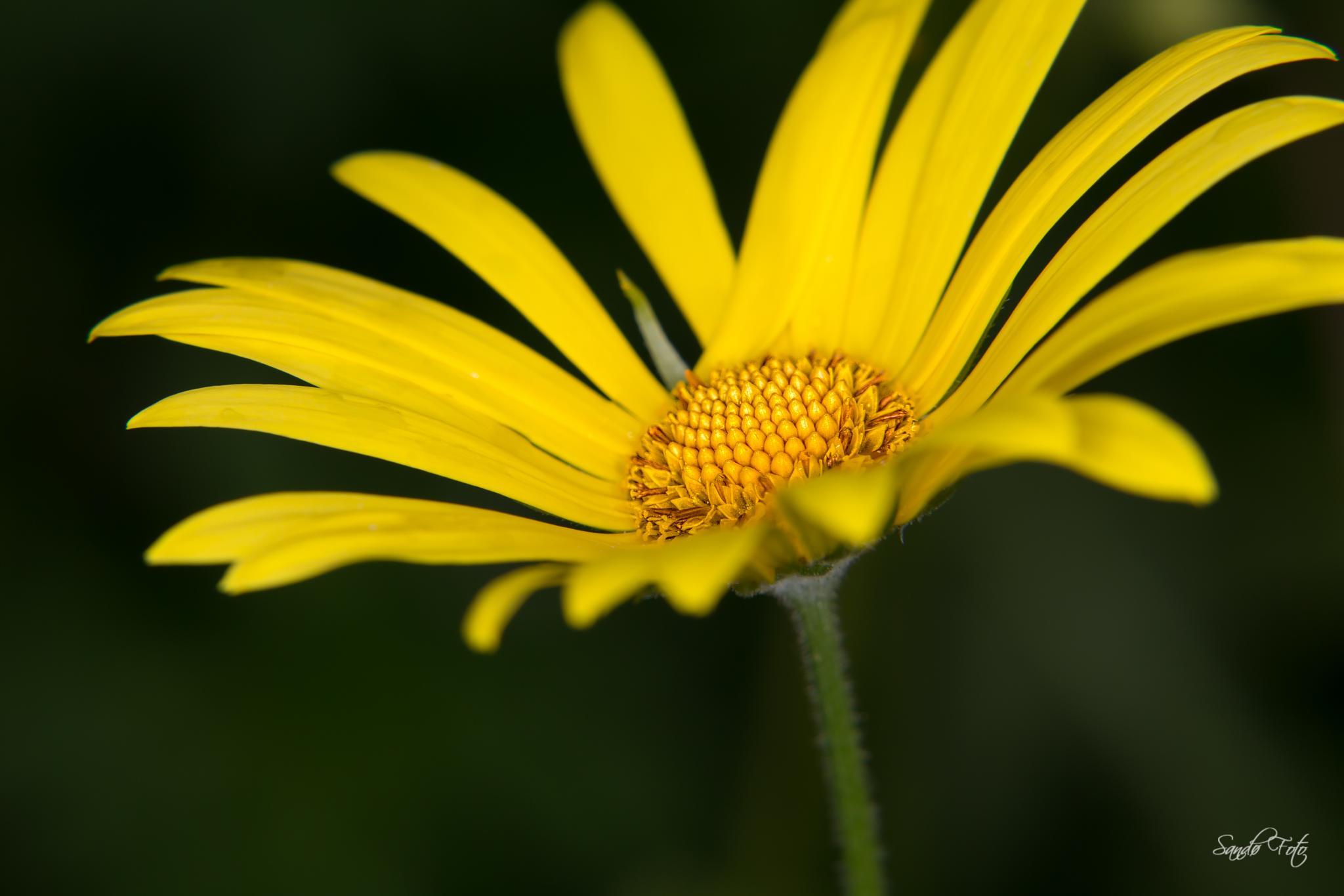 Macro flower by tjsandofoto