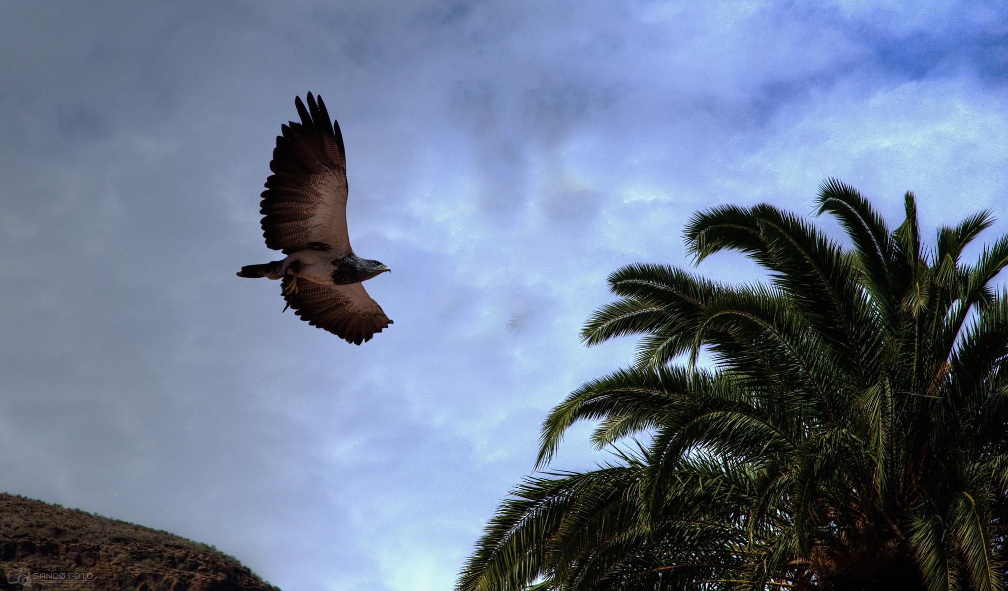 Bird of prey by tjsandofoto