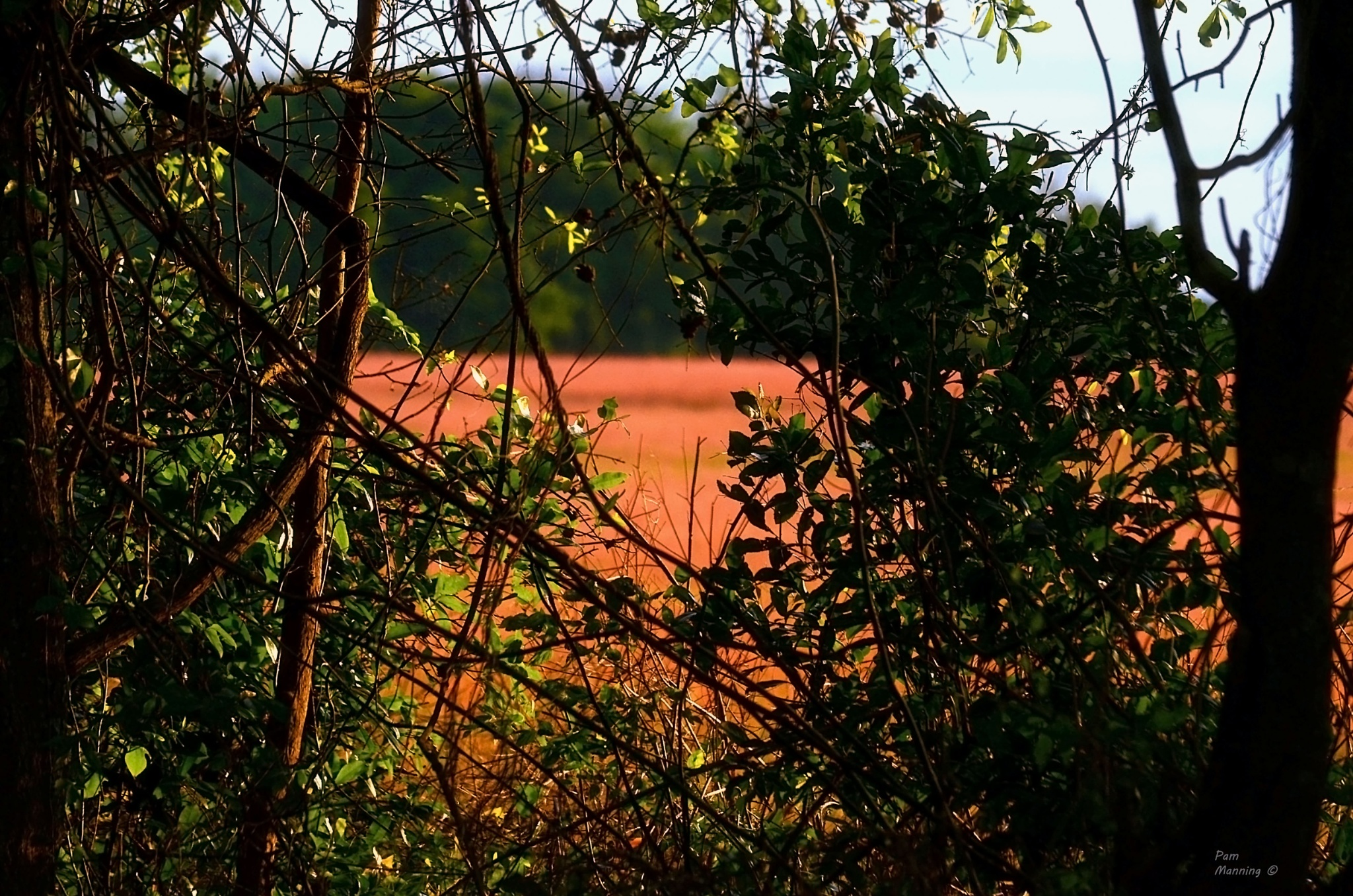 Vines and wheat w a touch of sunshine by pam.satterfieldmanning