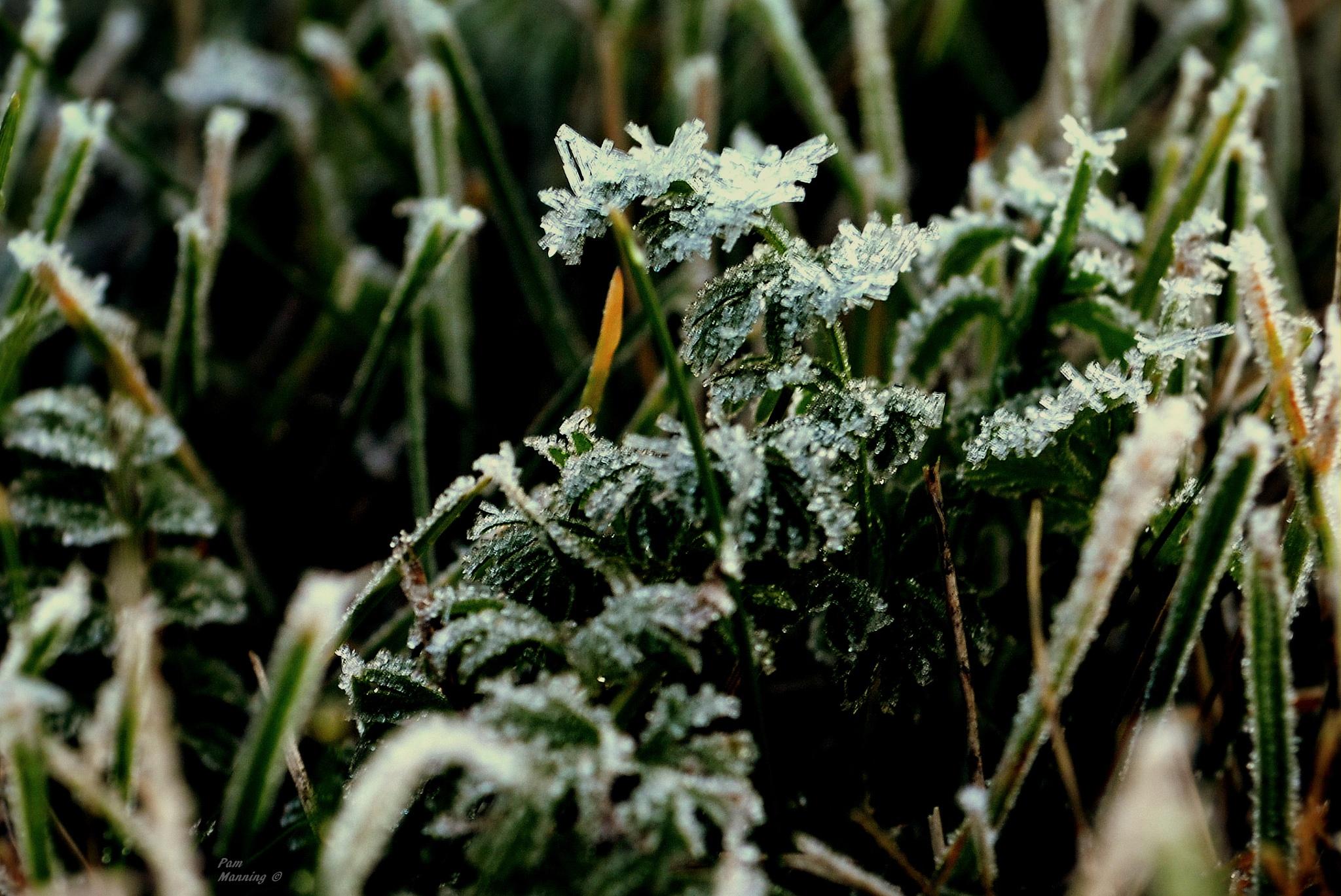 frost 1 by pam.satterfieldmanning
