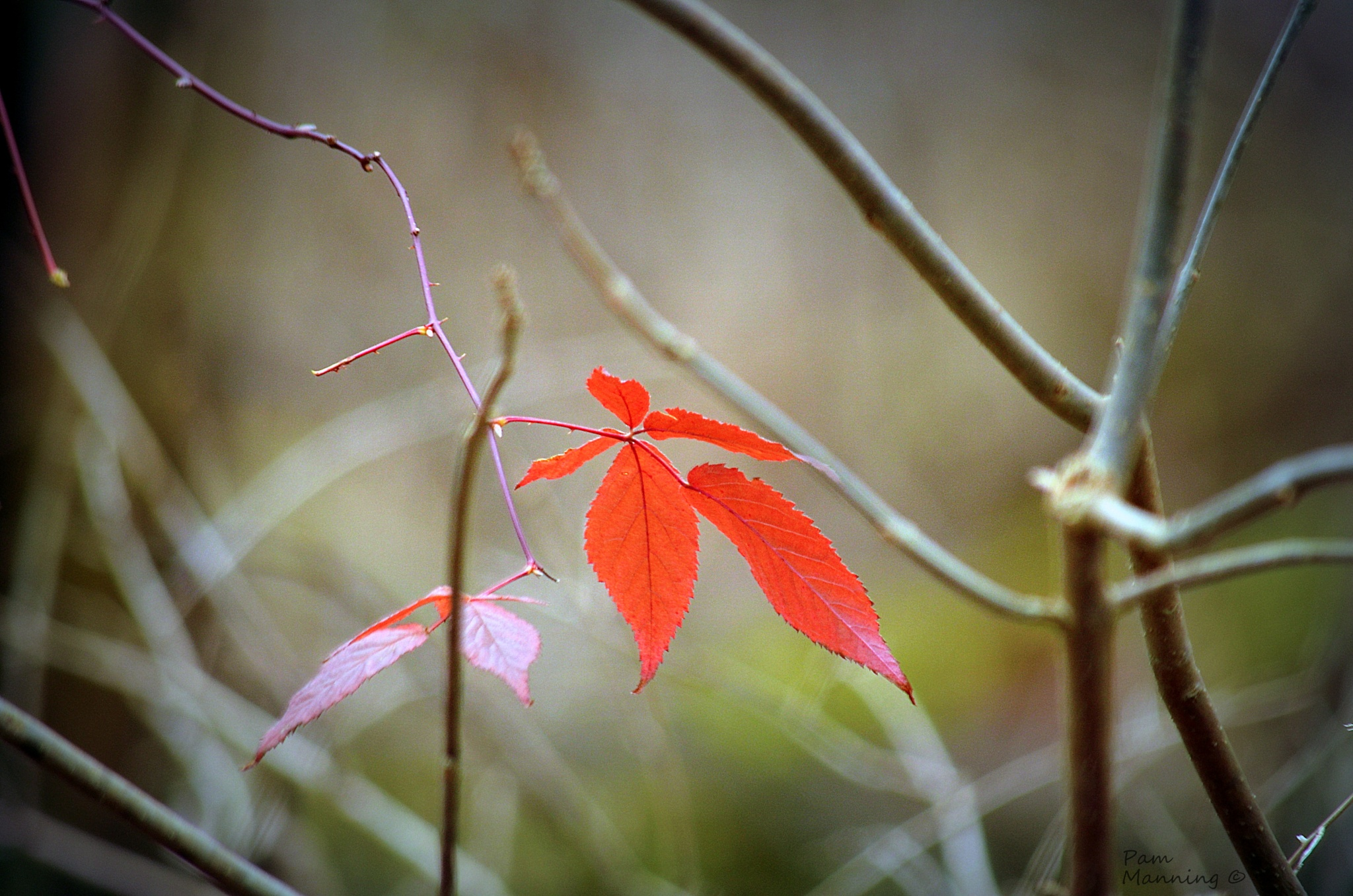 Hanging on. . . by pam.satterfieldmanning