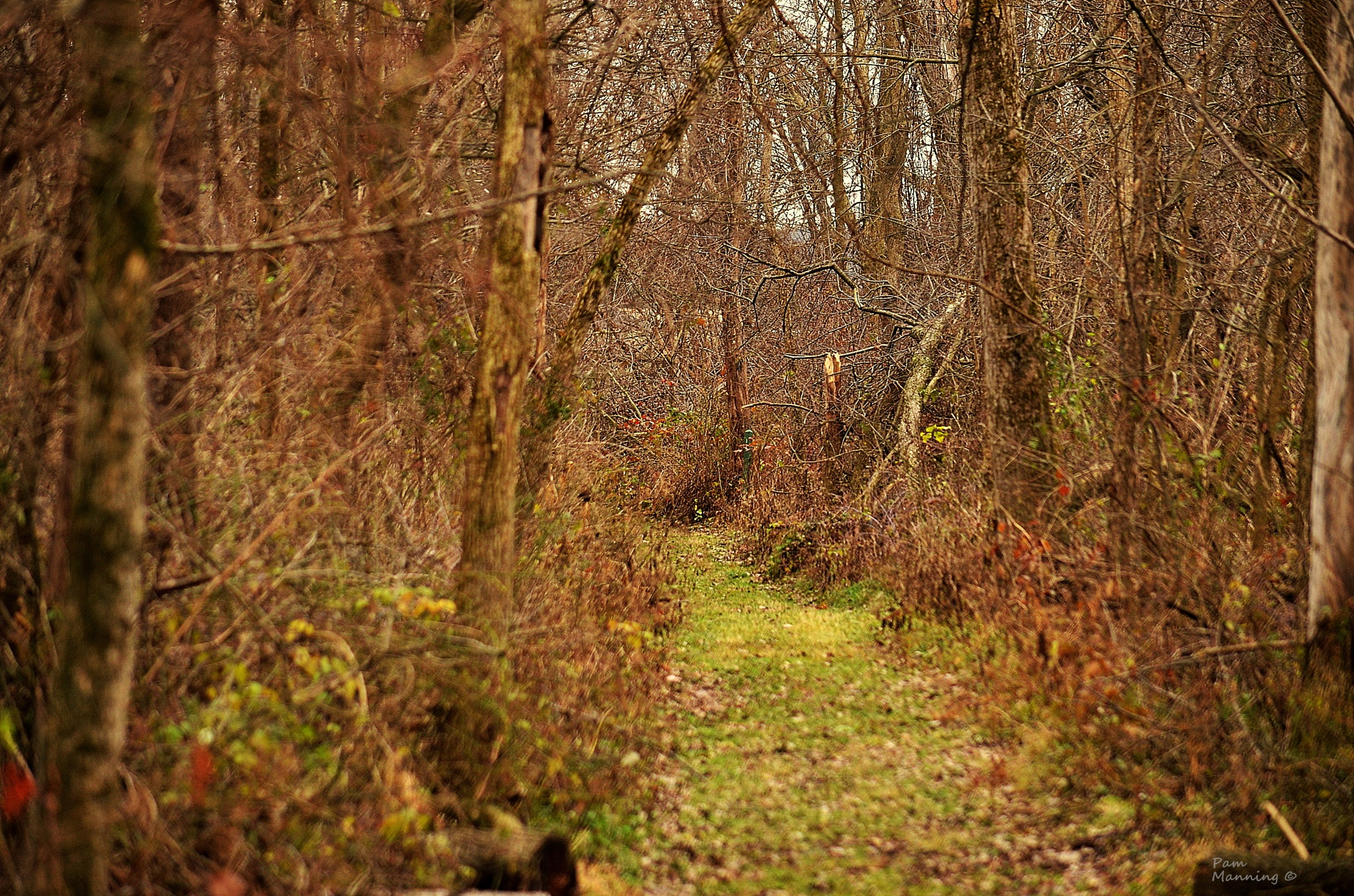 Forrest trail by pam.satterfieldmanning