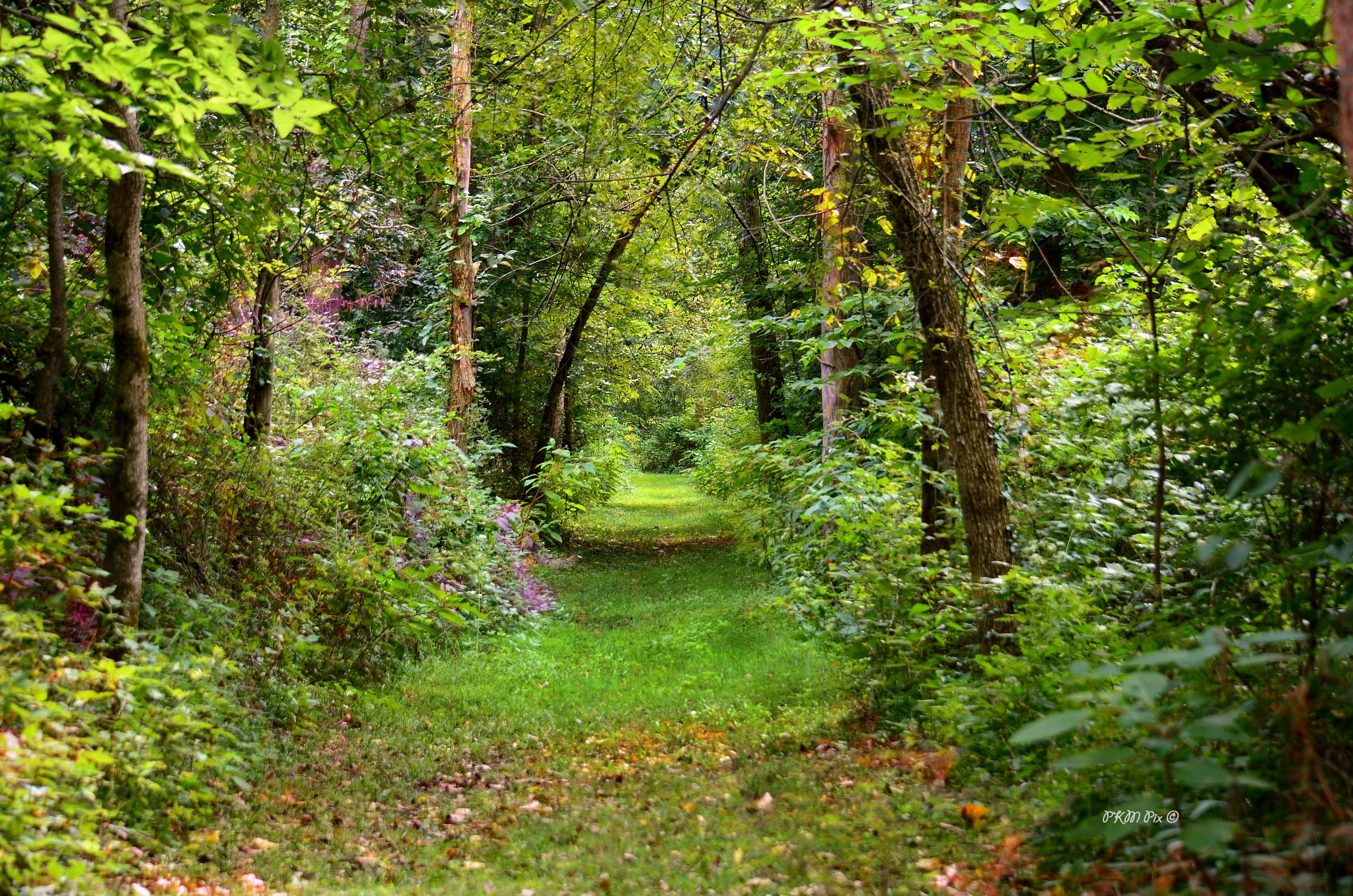 Peaceful Path by pam.satterfieldmanning