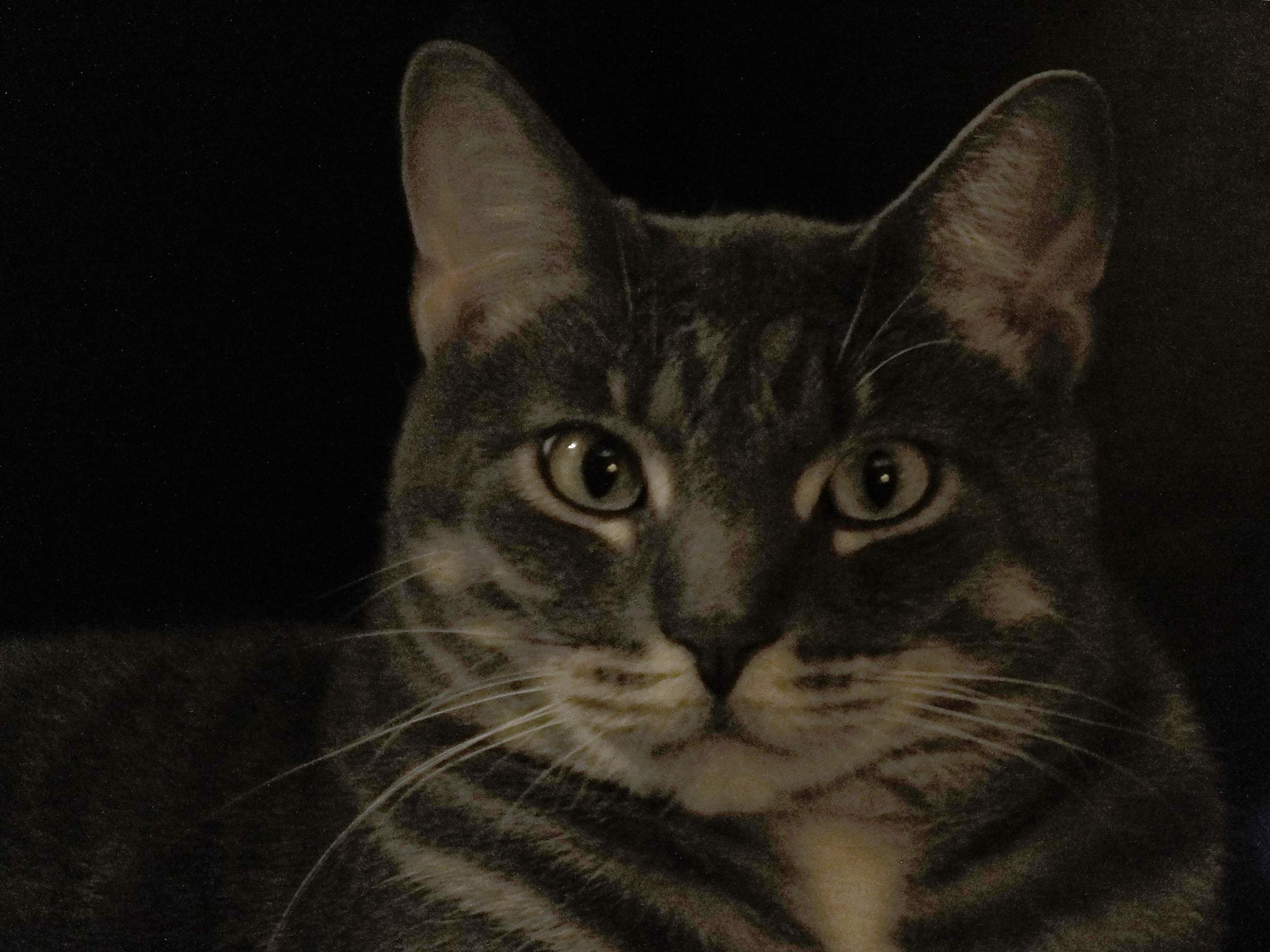 Feline Guy Liner by McaSasW
