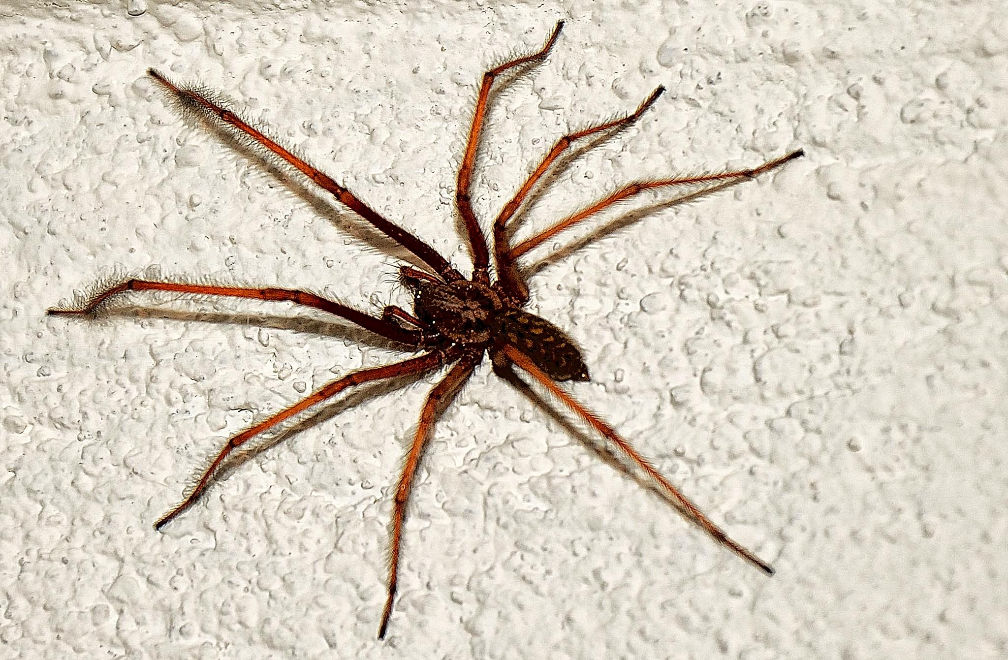 Spider by Lars Svendsen