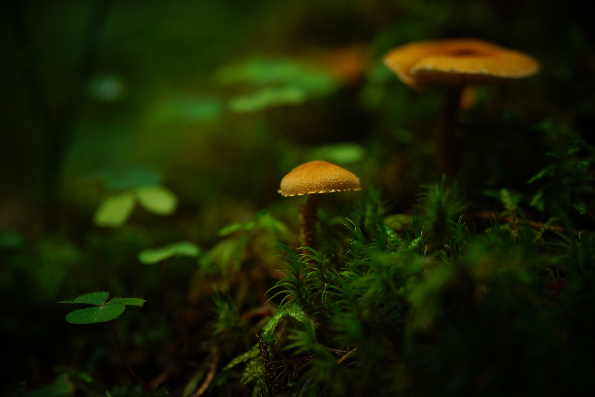 Deeps Forrest mushrooms by Andreas Karlsson