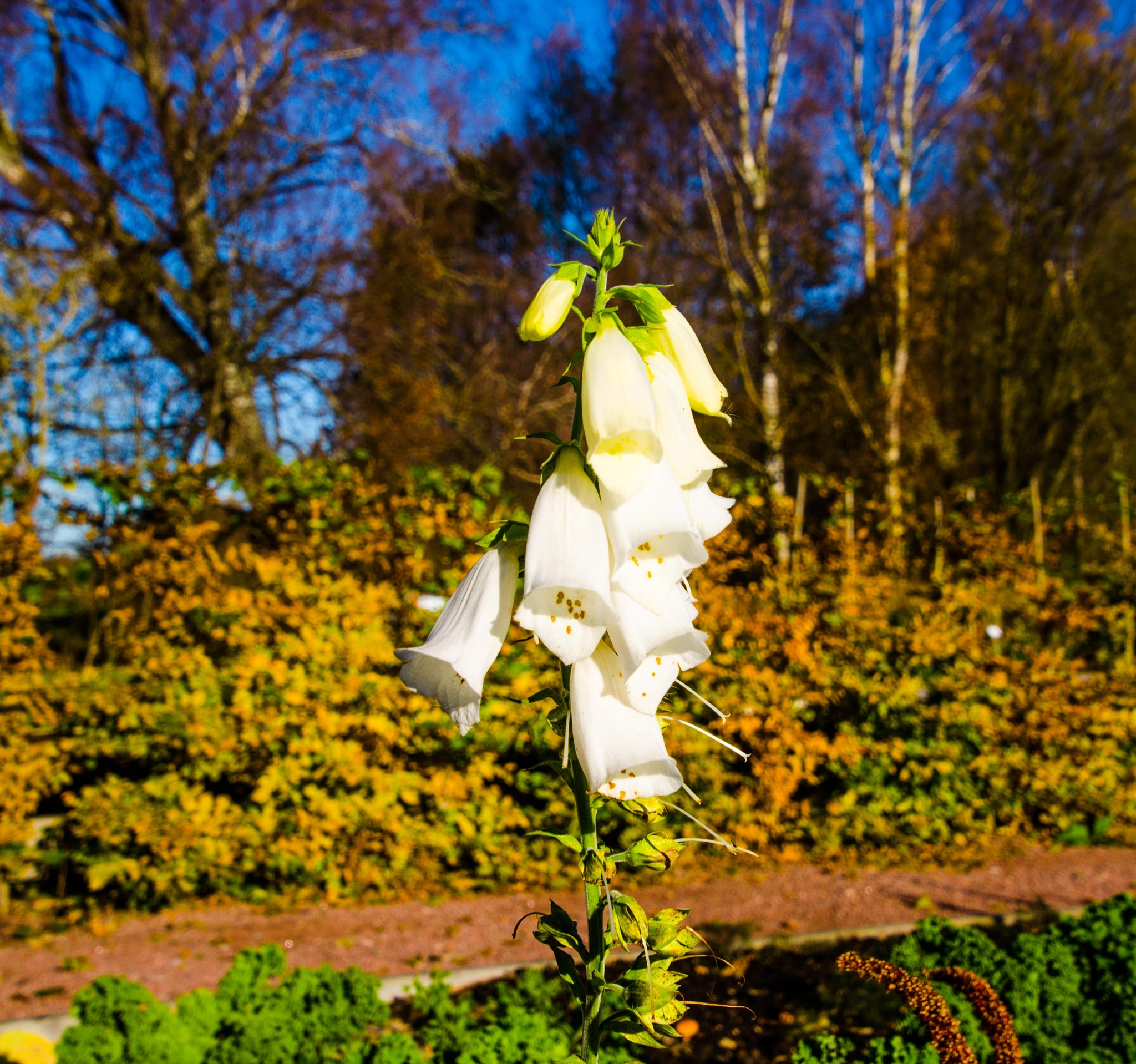 Flowers in beautiful autumn weather by Johnny Lythell