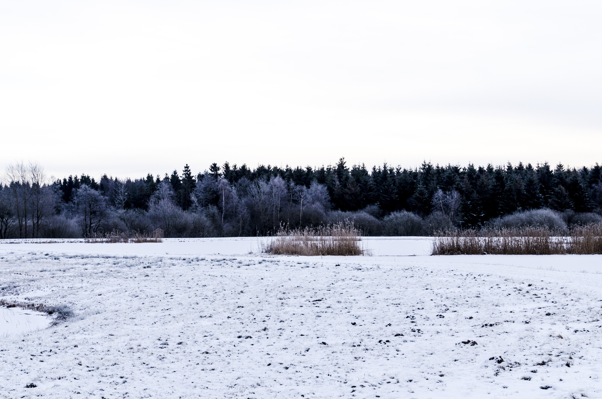The wetland in winter by Johnny Lythell