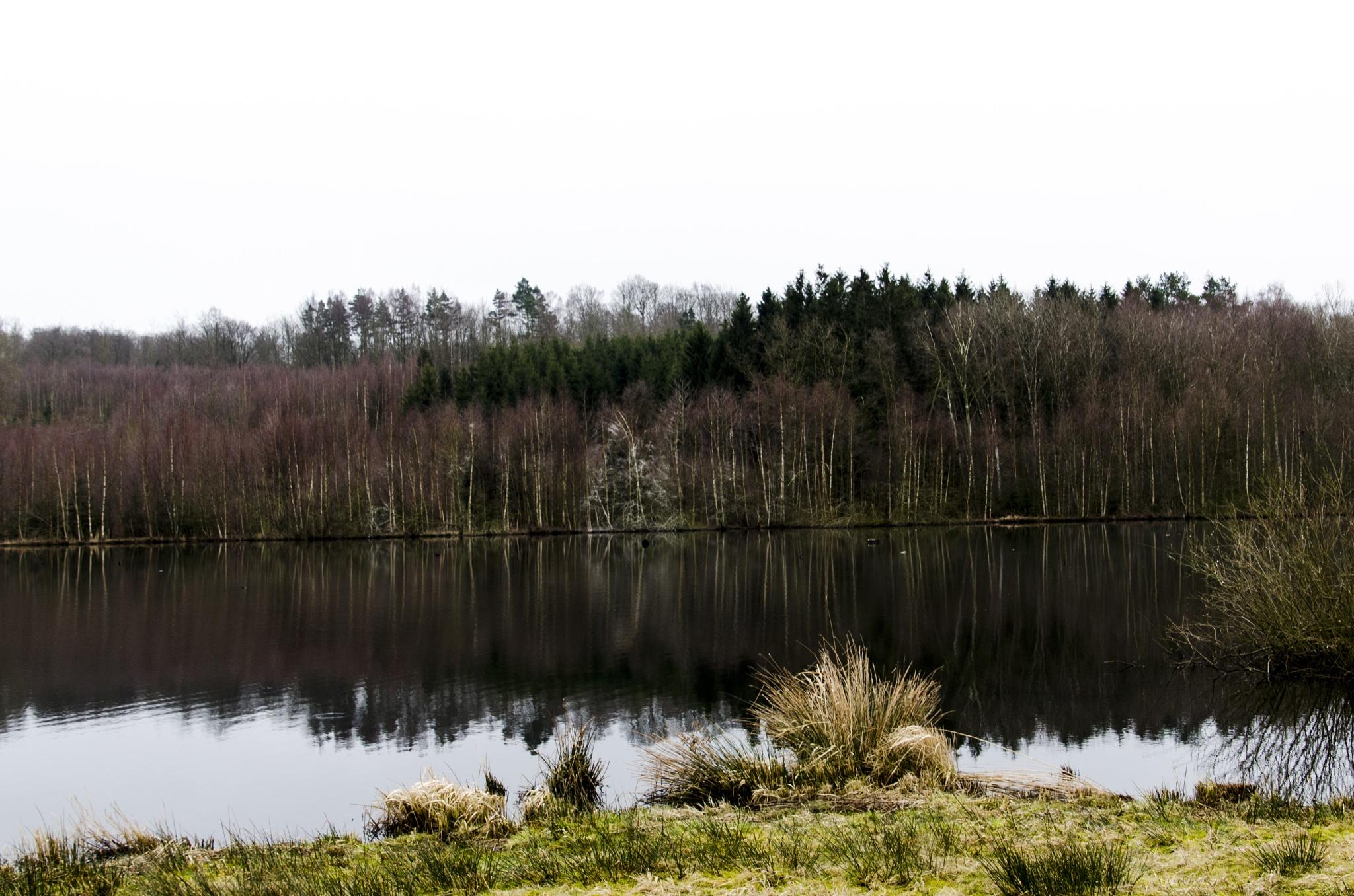 Landscape by Johnny Lythell
