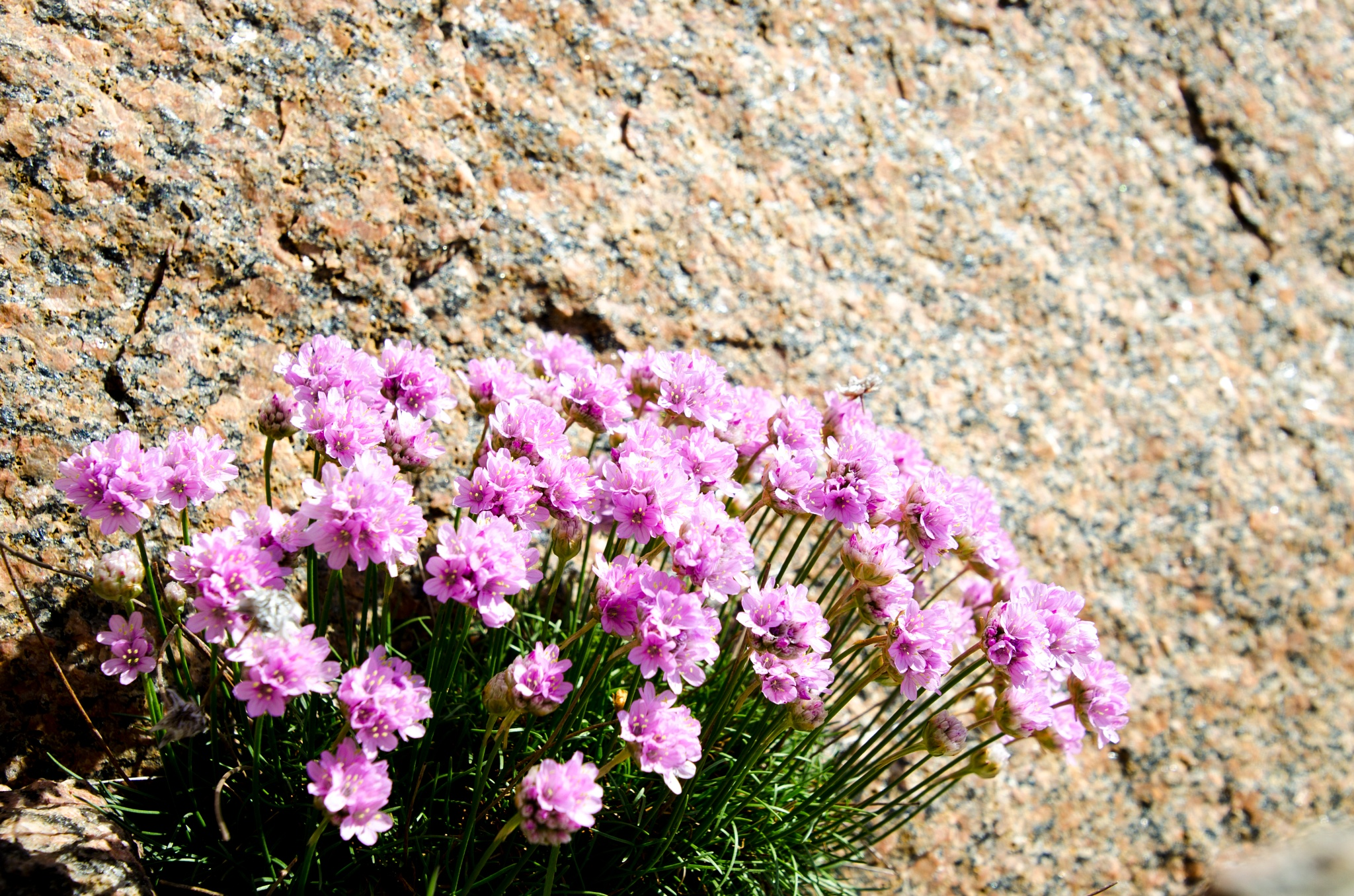 Flowers growing on the rocks by Johnny Lythell