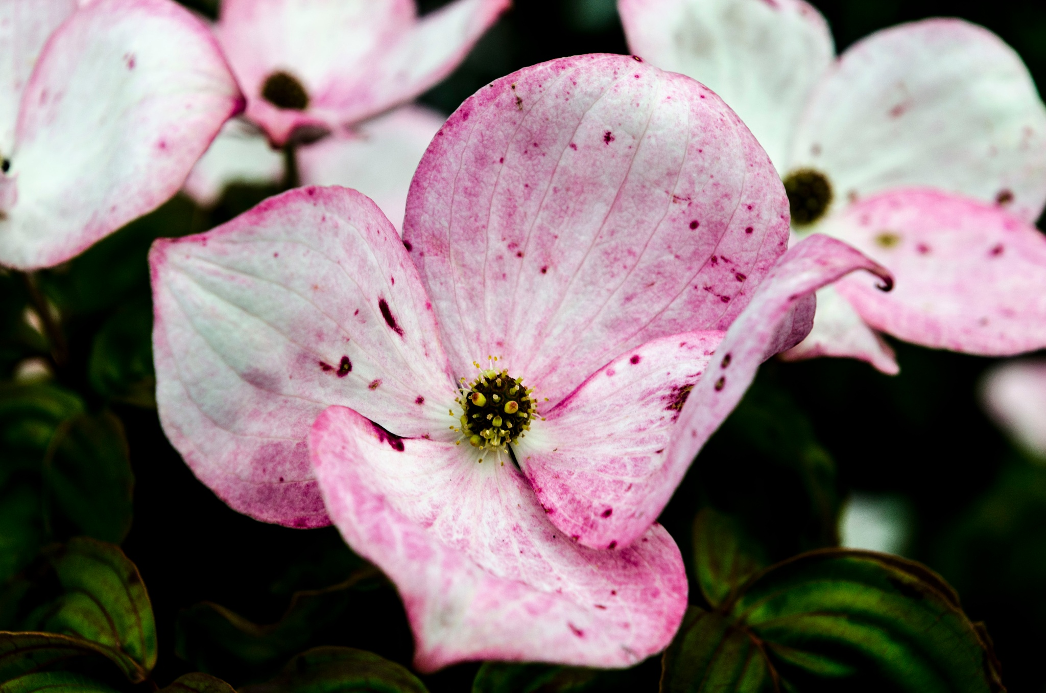Flower on a bush by Johnny Lythell
